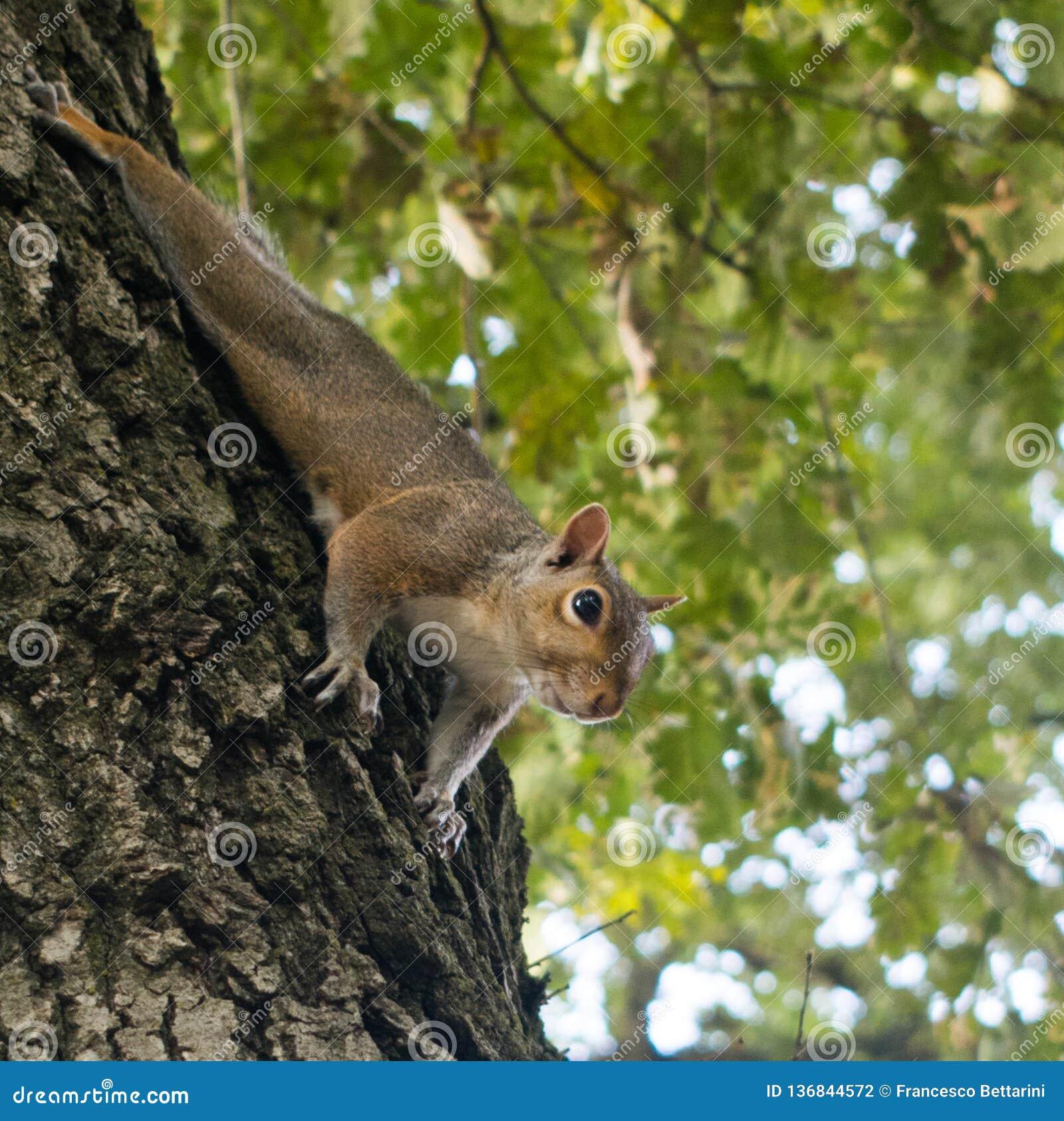 Piccolo scoiattolo che gioca nel parco