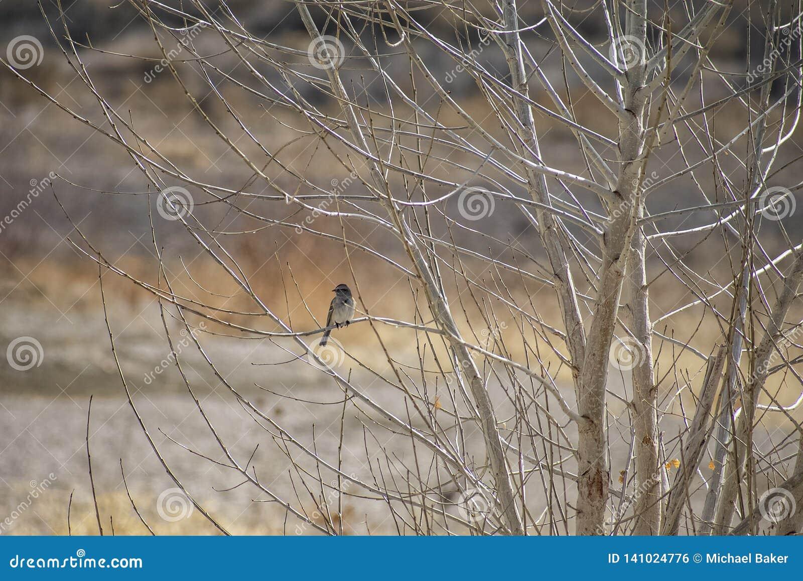 Piccolo uccello appollaiato sui rami di un Aspen sterile