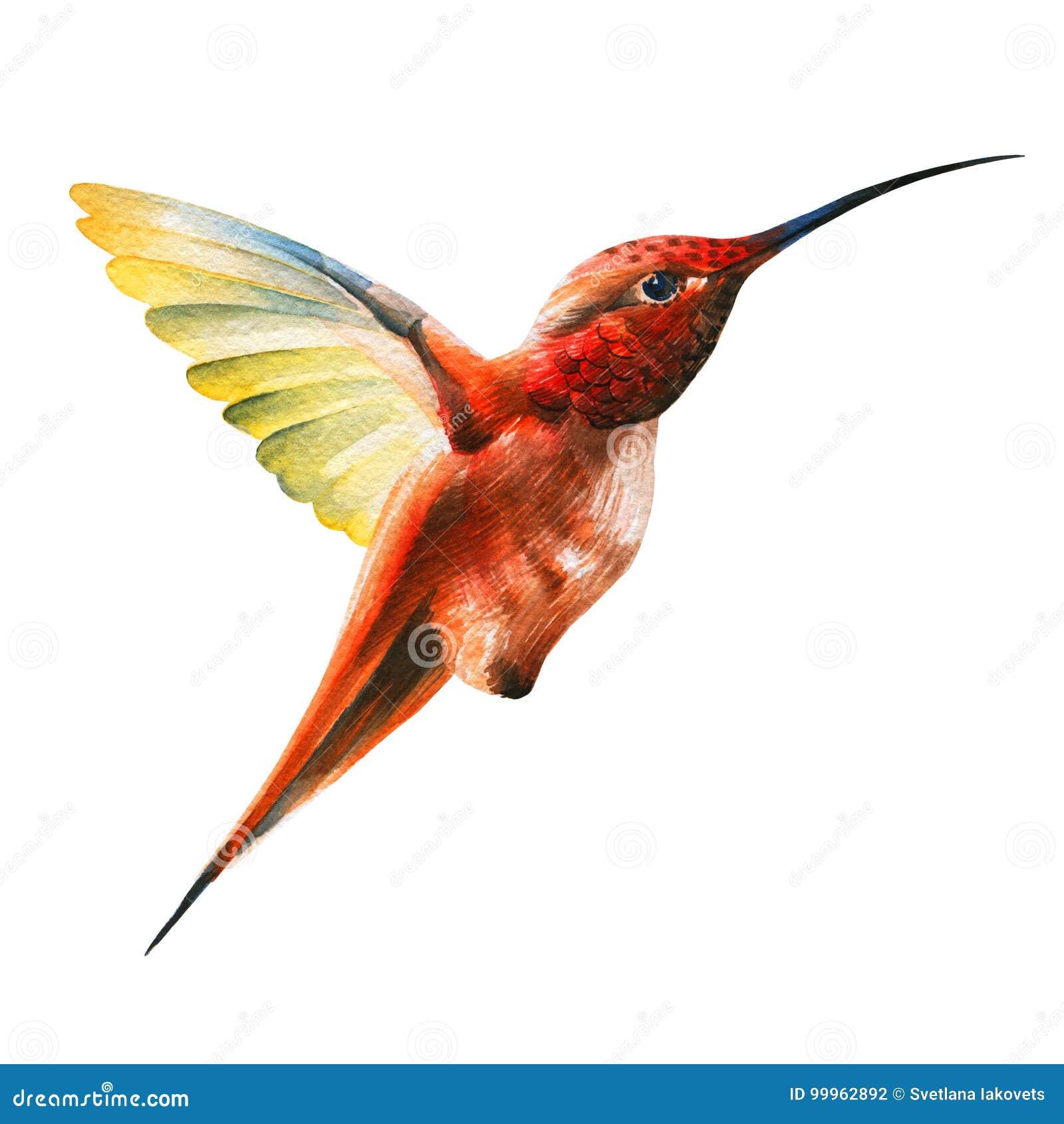 Piccolo uccello arancio di ronzio in volo