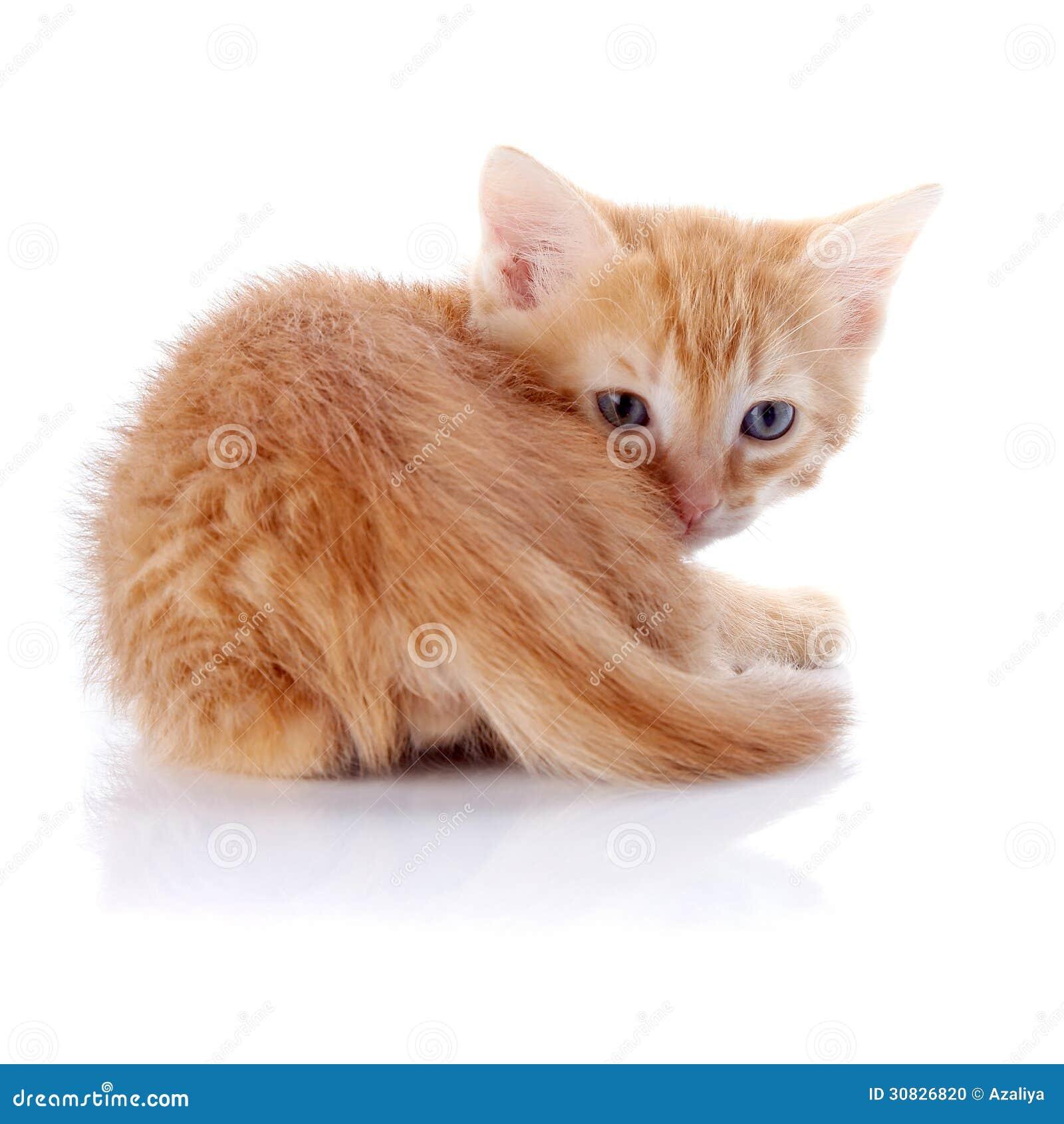 Piccolo un gattino rosso su un fondo bianco.