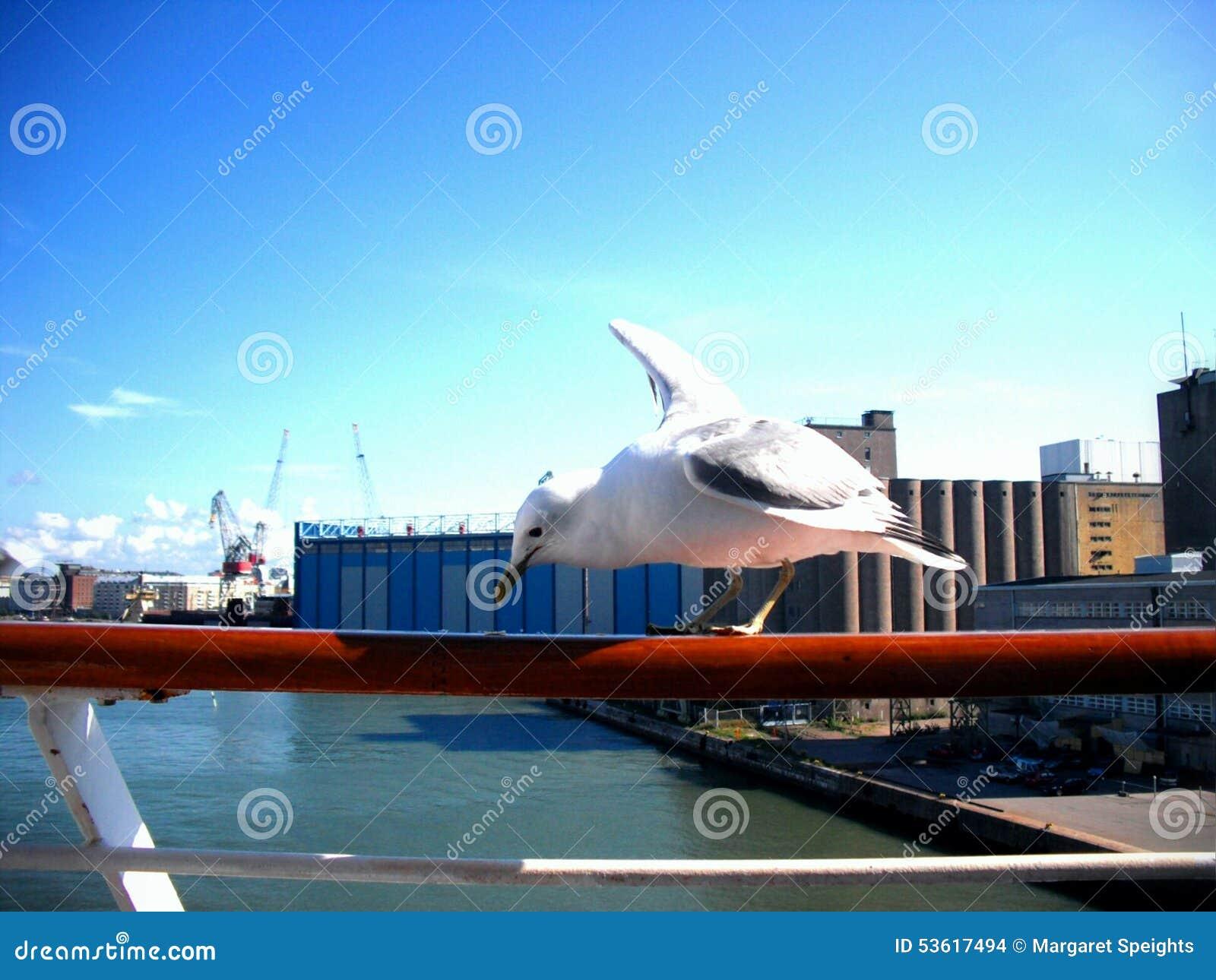 Picka för Seagull