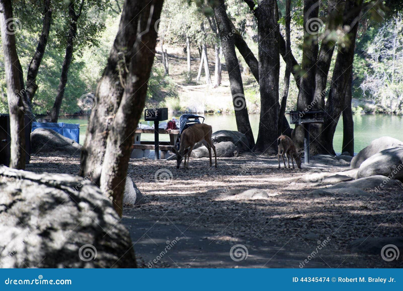 Picnic Deer