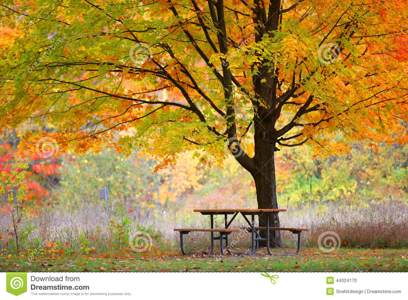 Picnic Table And Autumn Tree Stock Photo Image 44024170