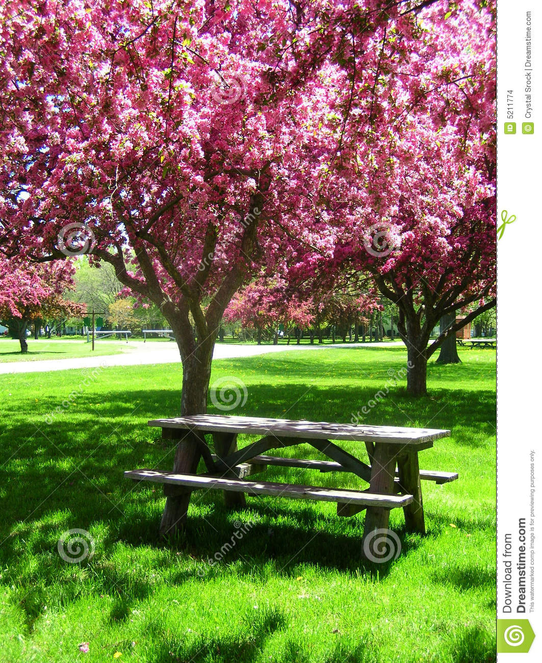 Picnic Table Under Pink Flowering Trees Stock Images ...