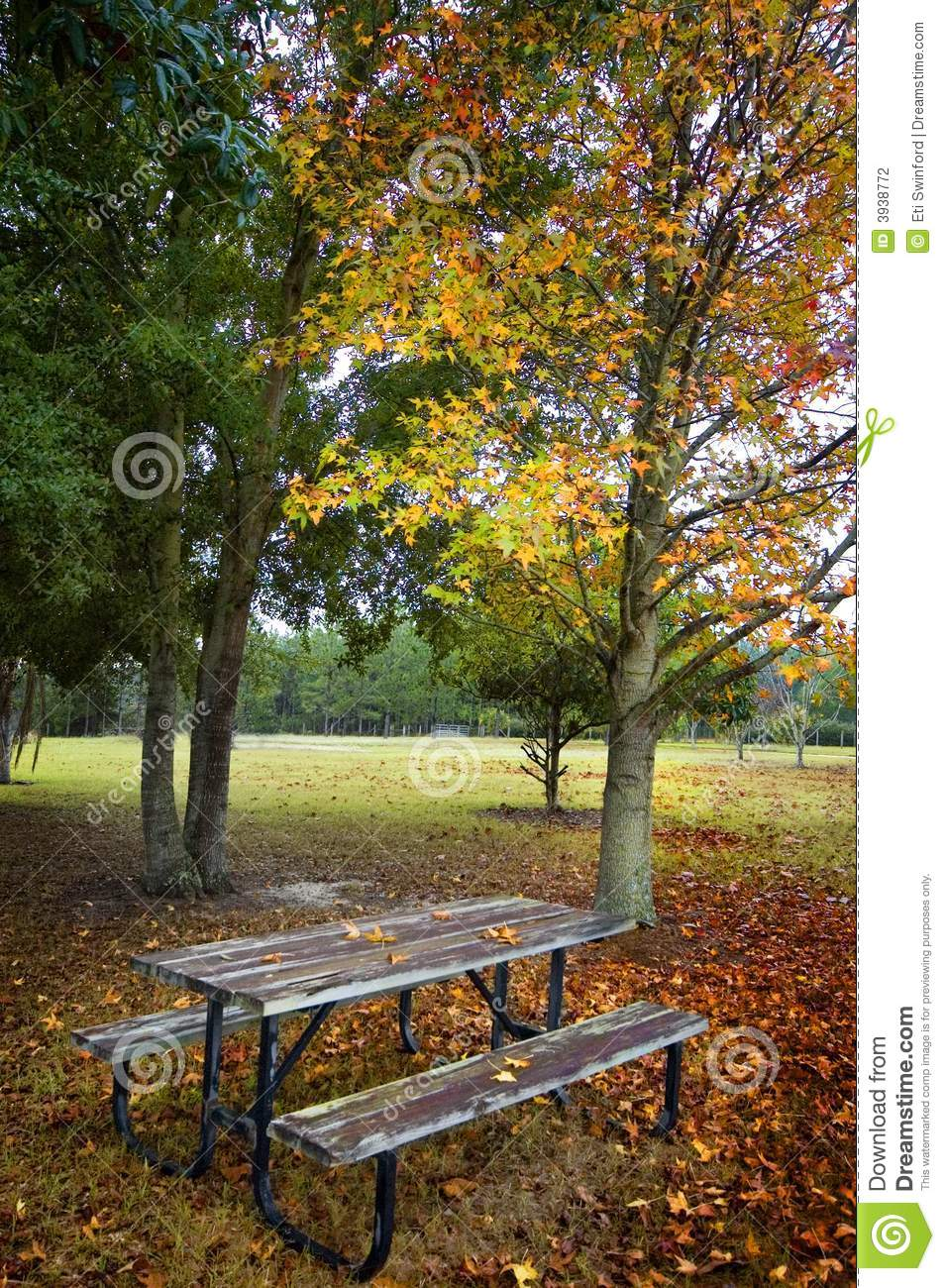 Picnic Table Under Tree Stock Photography Image 3938772
