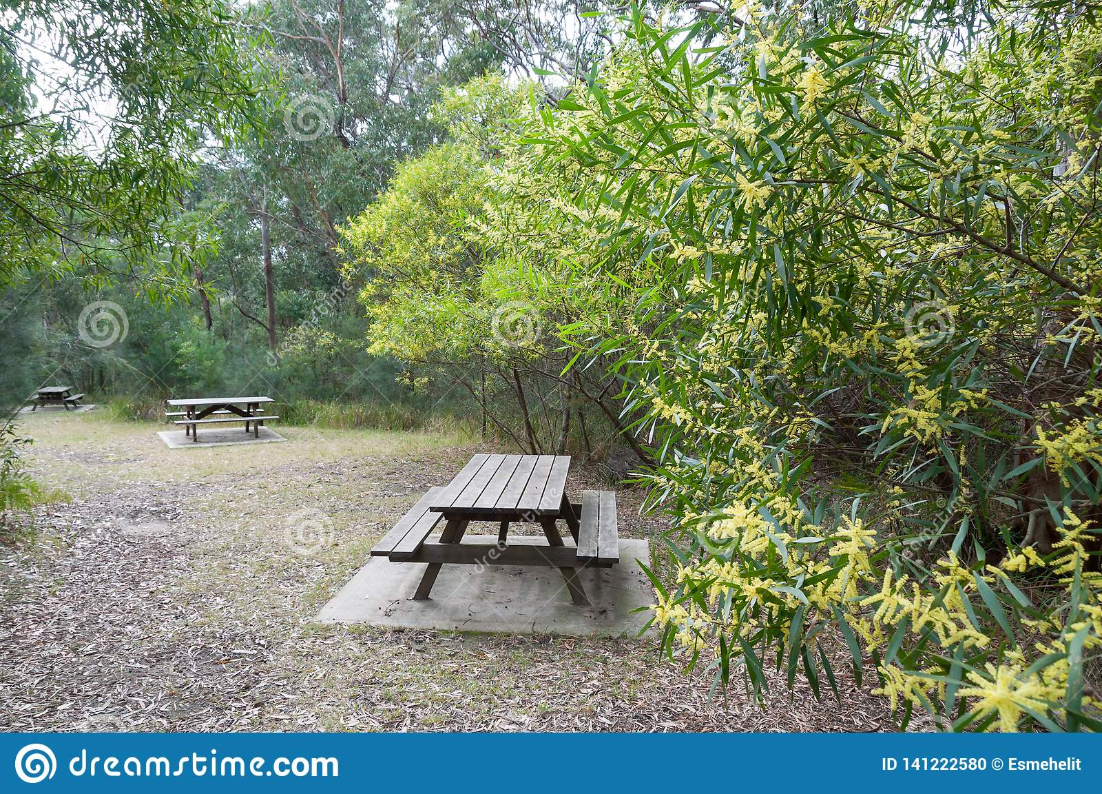 Surprising Picnic Tables And Benches On Picnic Area In The Park Stock Caraccident5 Cool Chair Designs And Ideas Caraccident5Info