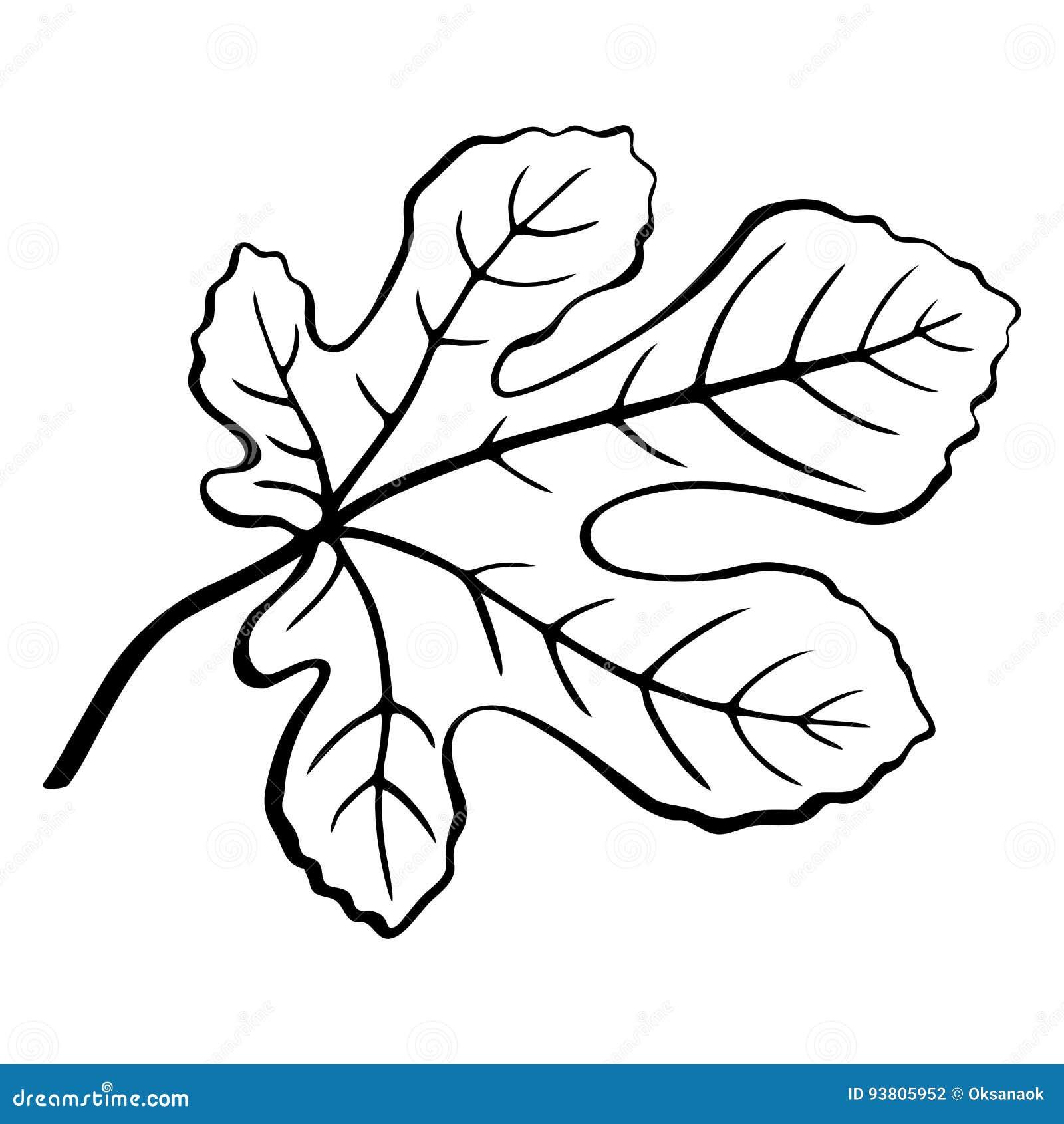 Pictogramme de noir de feuille de figue illustration de - Dessin figuier ...