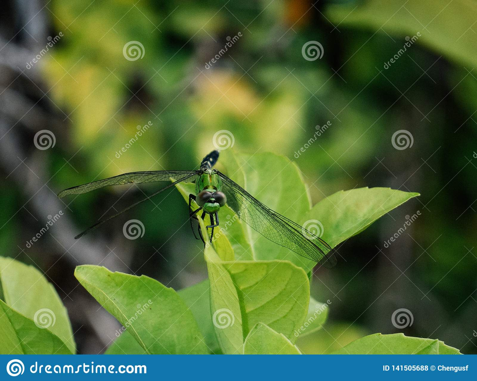 A picture of beautiful green dragonfly