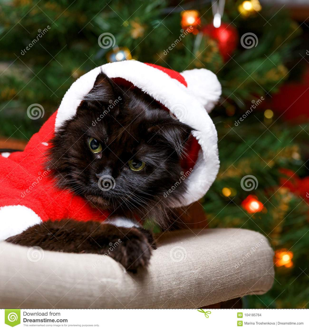 picture of black cat in santa costume in armchair against background of decorated christmas tree - Black Cat Christmas Tree Decoration
