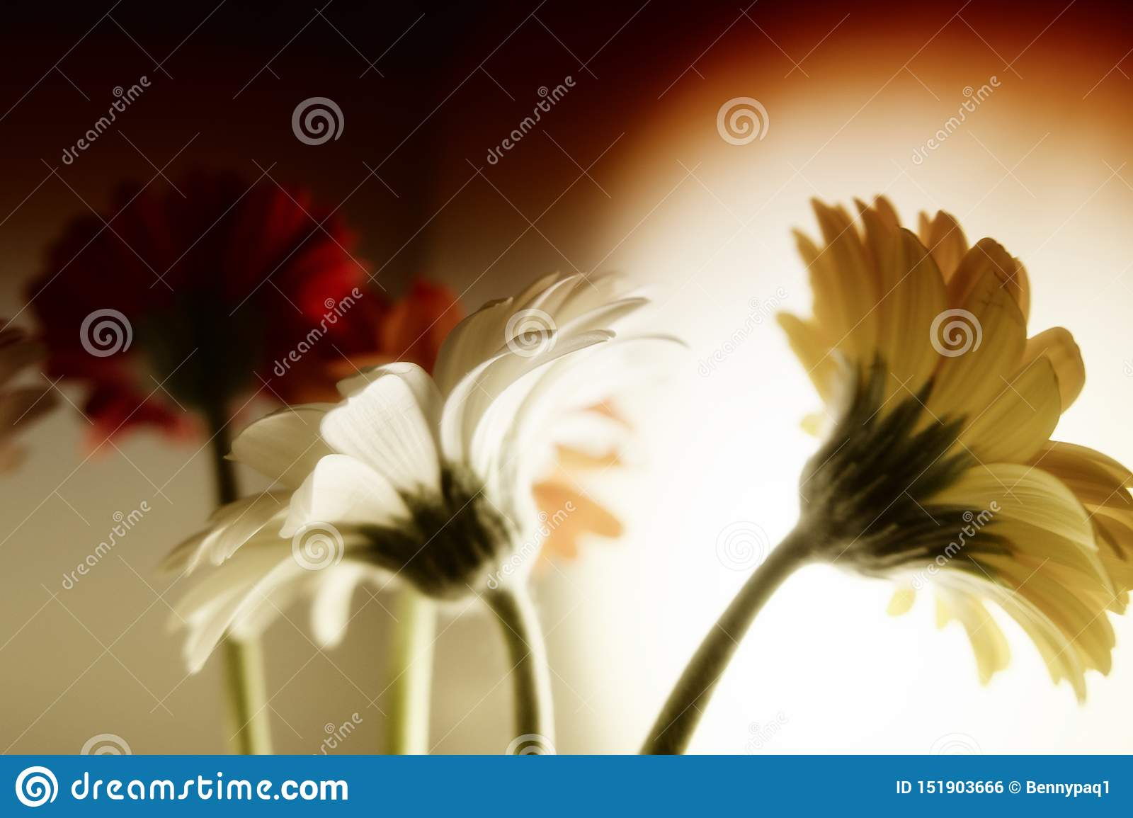 Colorful Gerbera Daisies In A Vase Stock Photo - Image of ...