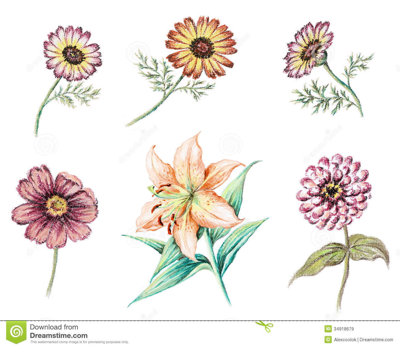 aster flower drawing, Beautiful flower