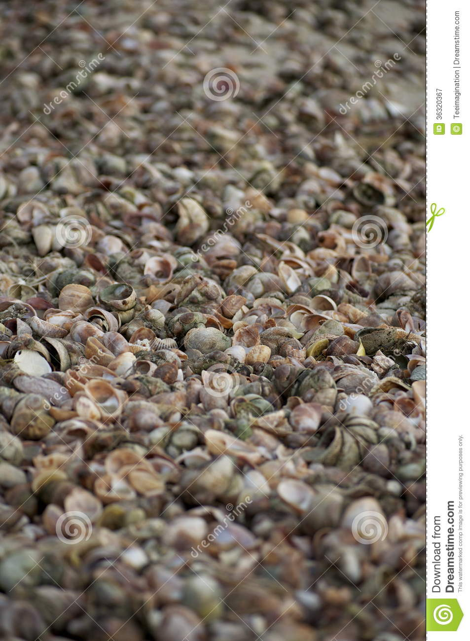 Picture Full Of Sea Shells Royalty Free Stock Photography