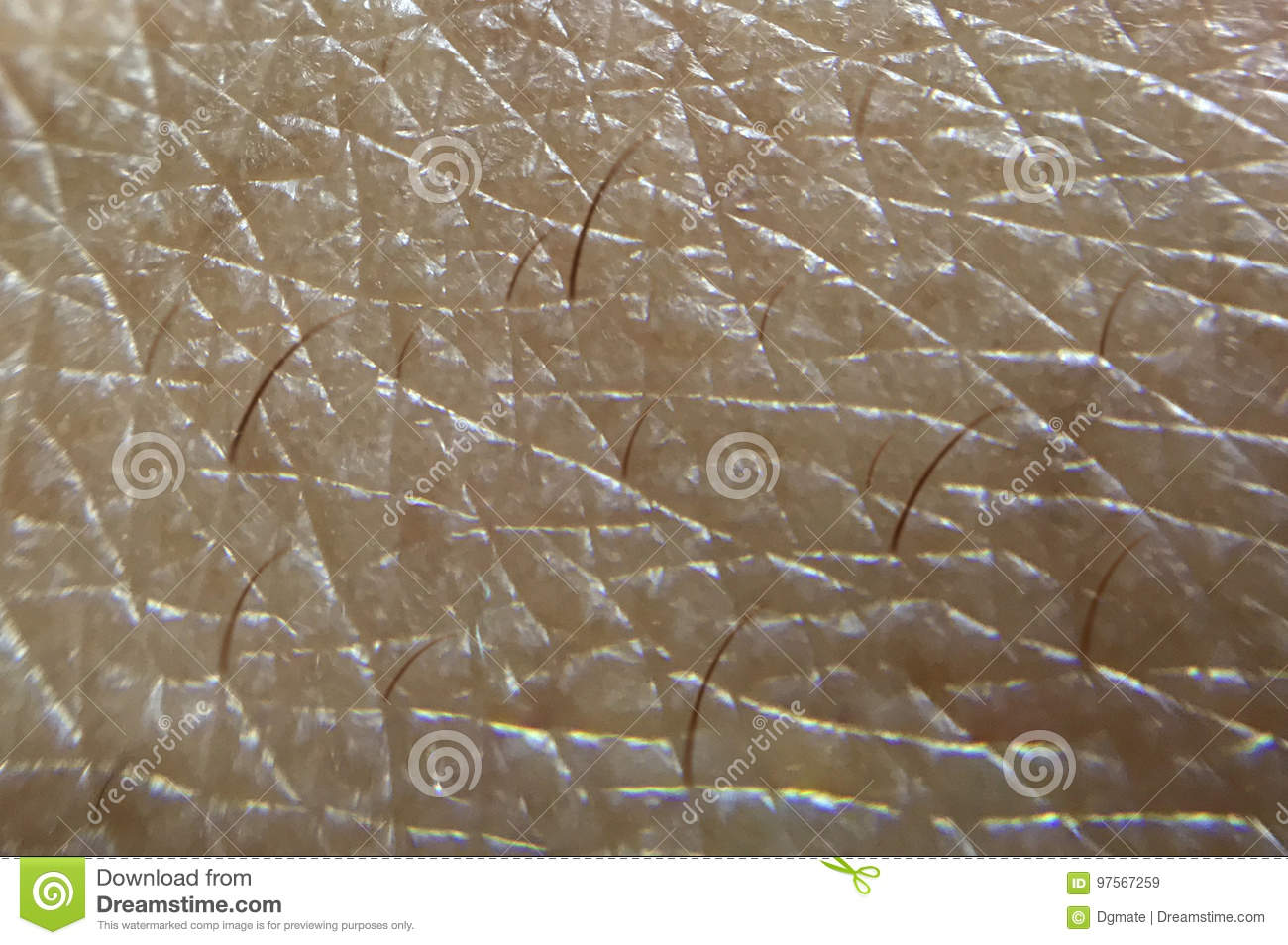 Human Skin close up shot