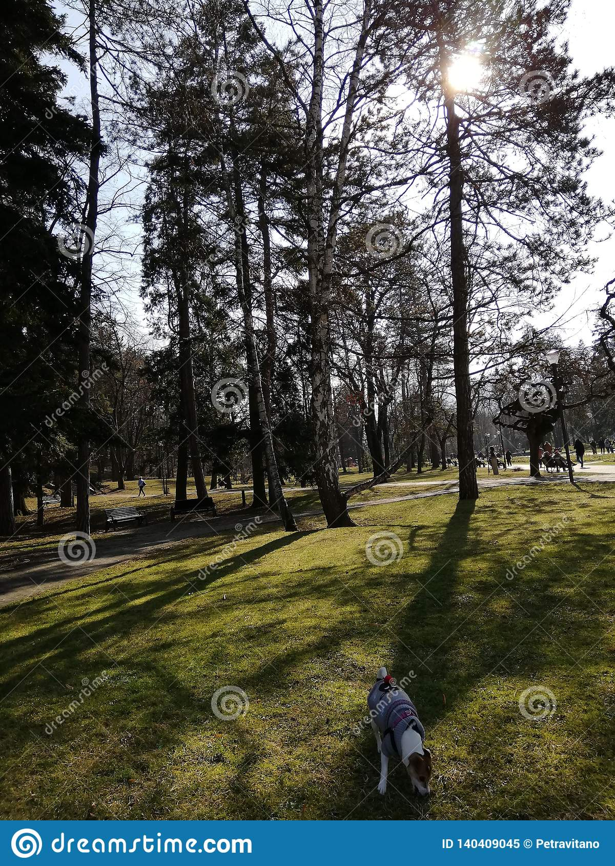 Park with dog