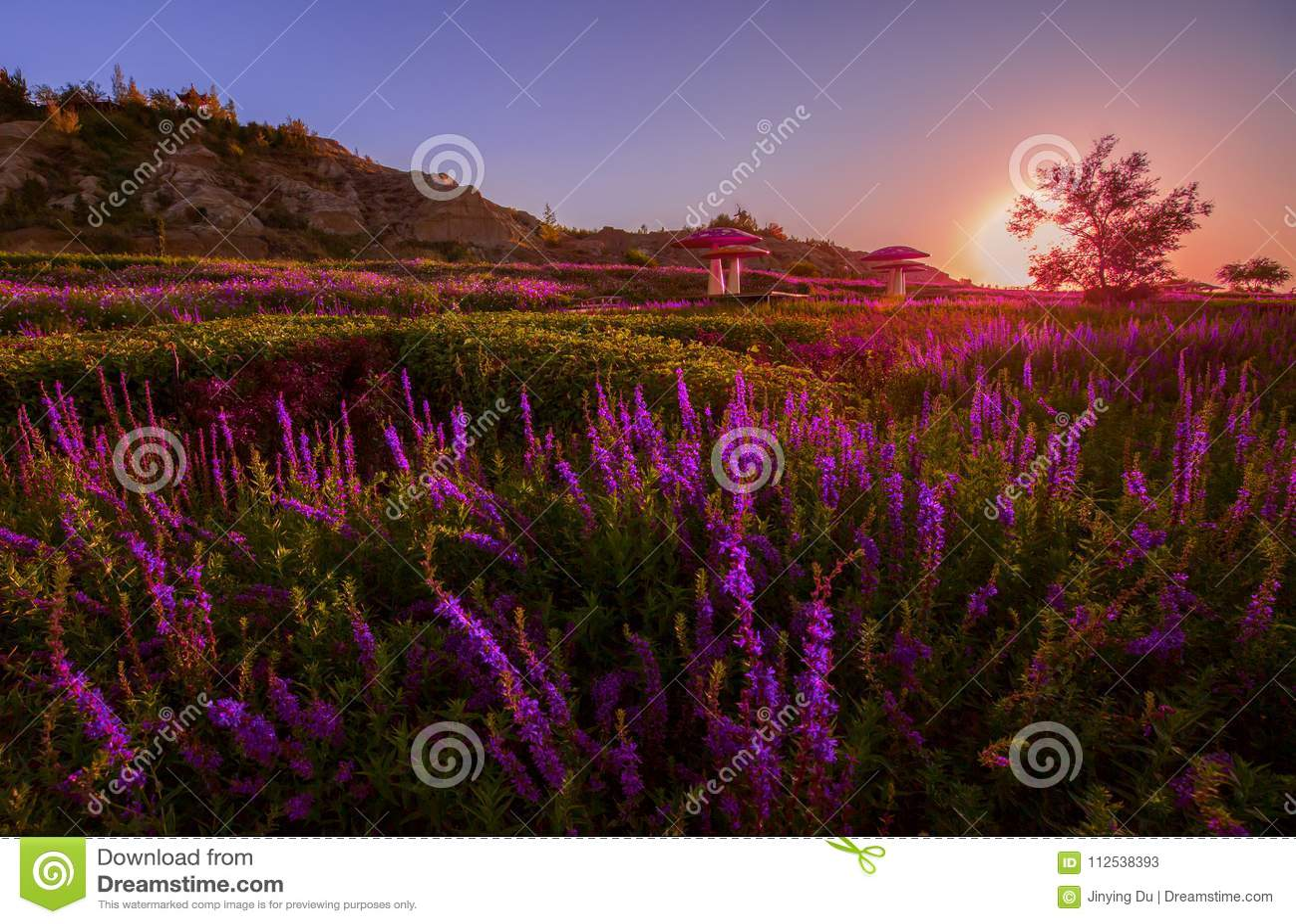 Lavender planted at foot of Tianshan mountain China