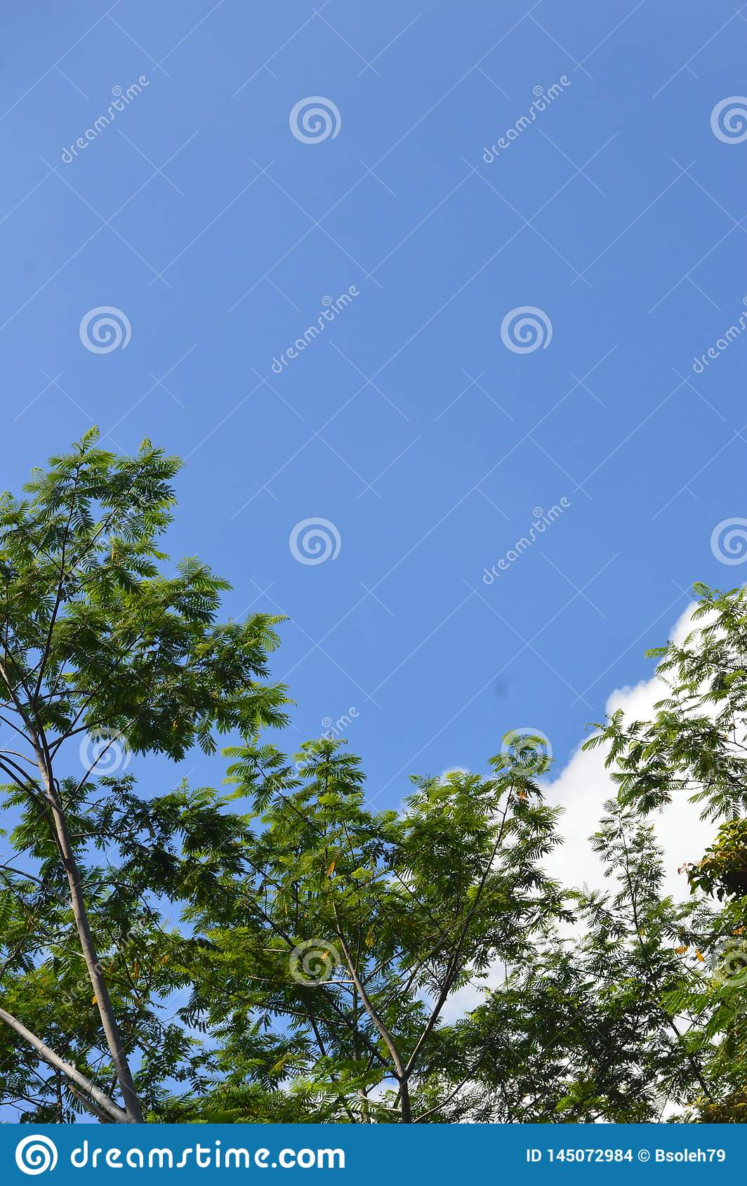 A picture of a tree that towered to the sky