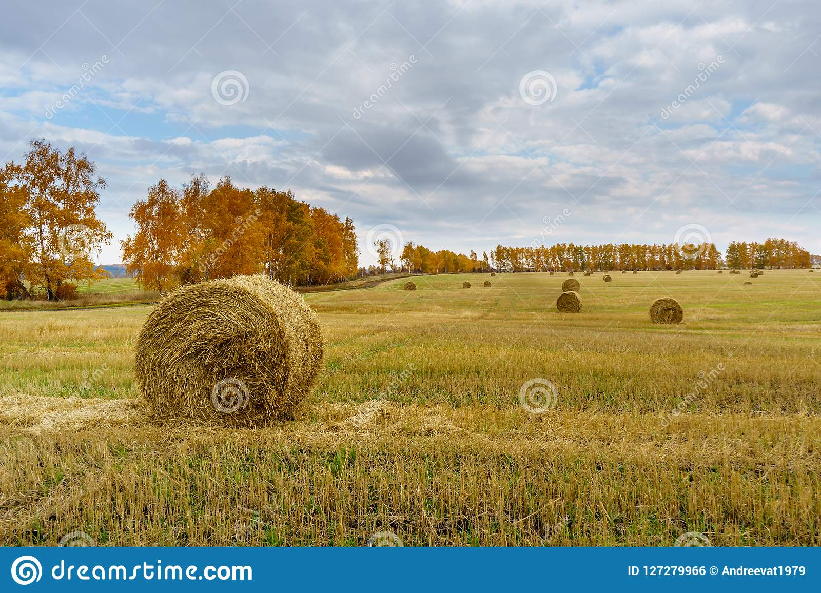 Picturesque autumn landscape with beveled field and straw bales.