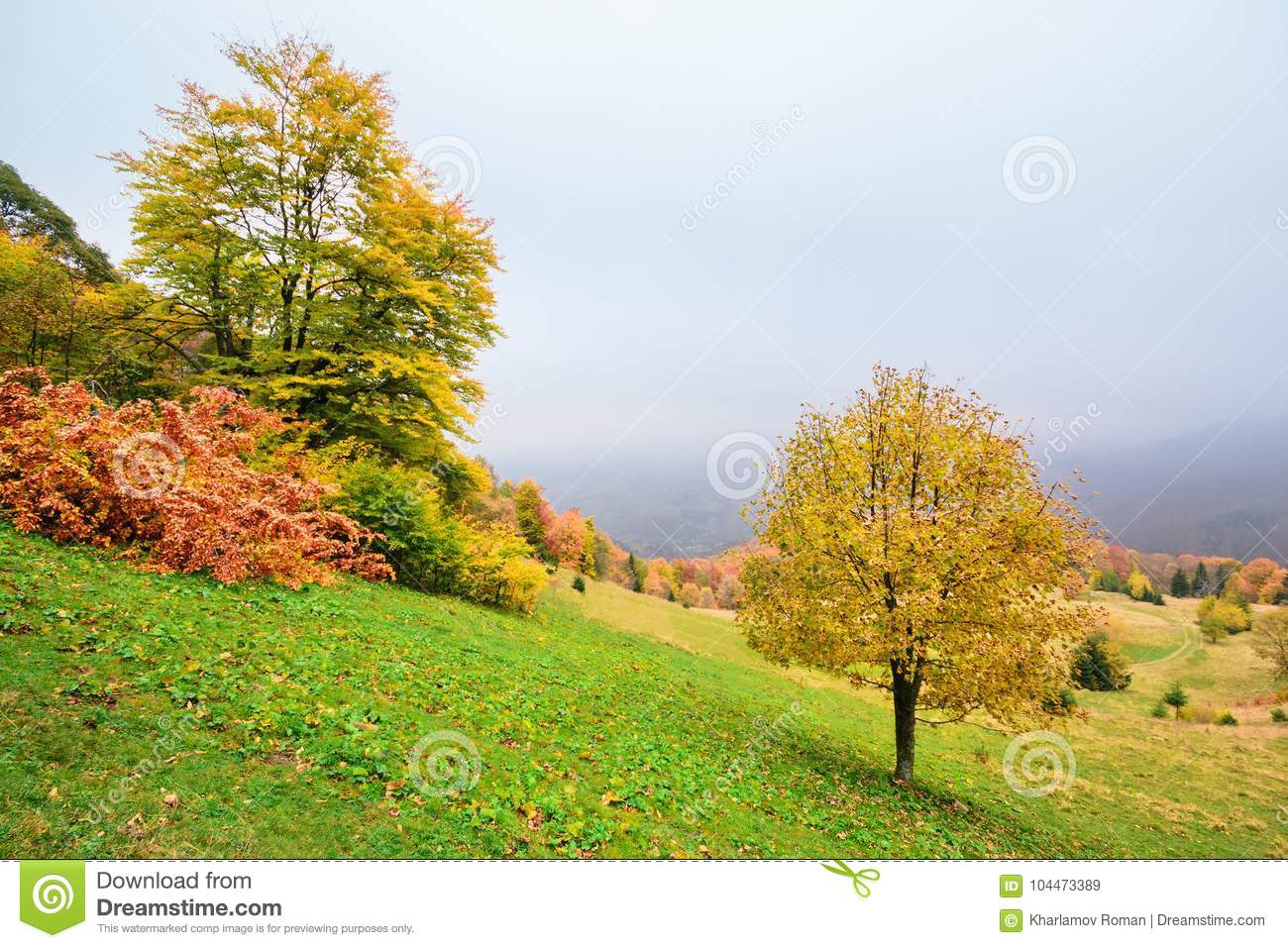 Picturesque autumn scenery in the mountains with meadow and colorful trees on foreground and fog above valley.