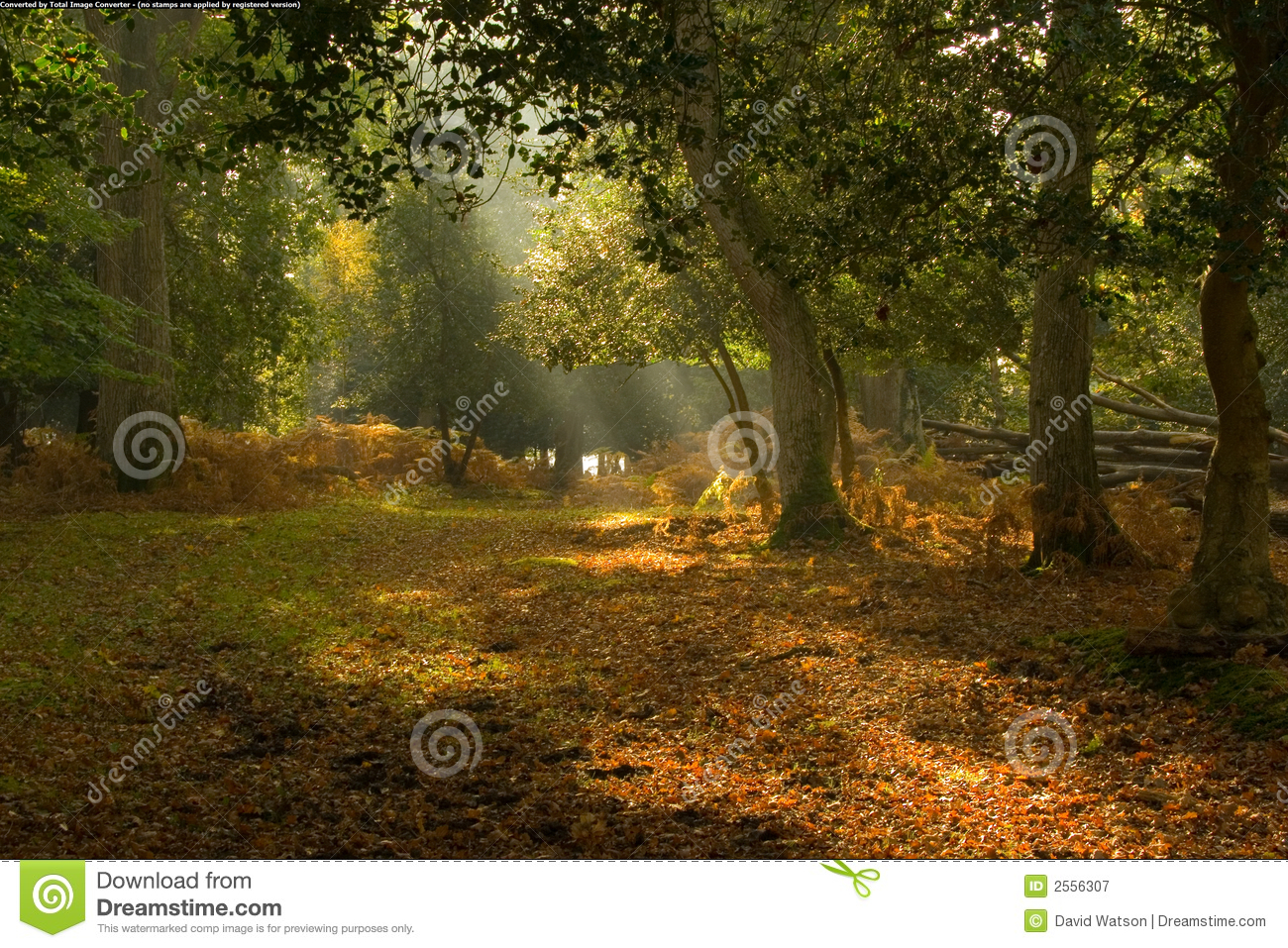 Picturesque clearing in forest