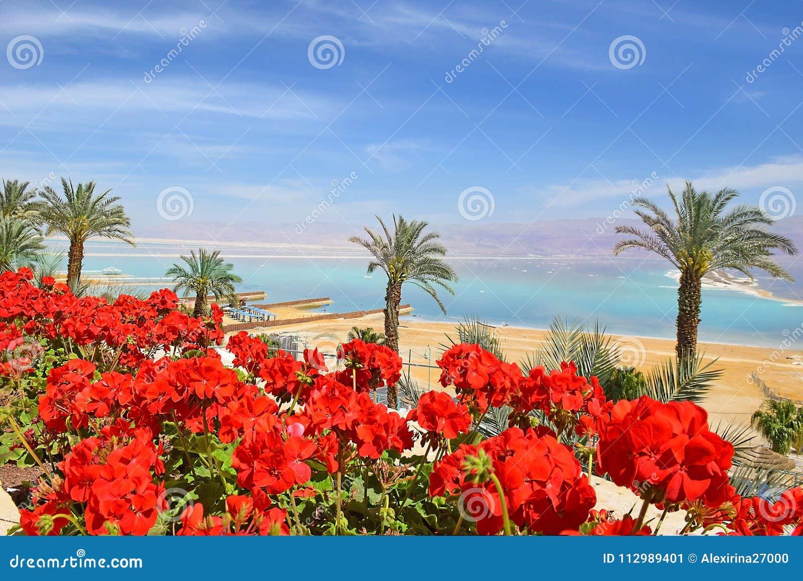 Beach at the Dead Sea, israeli shore
