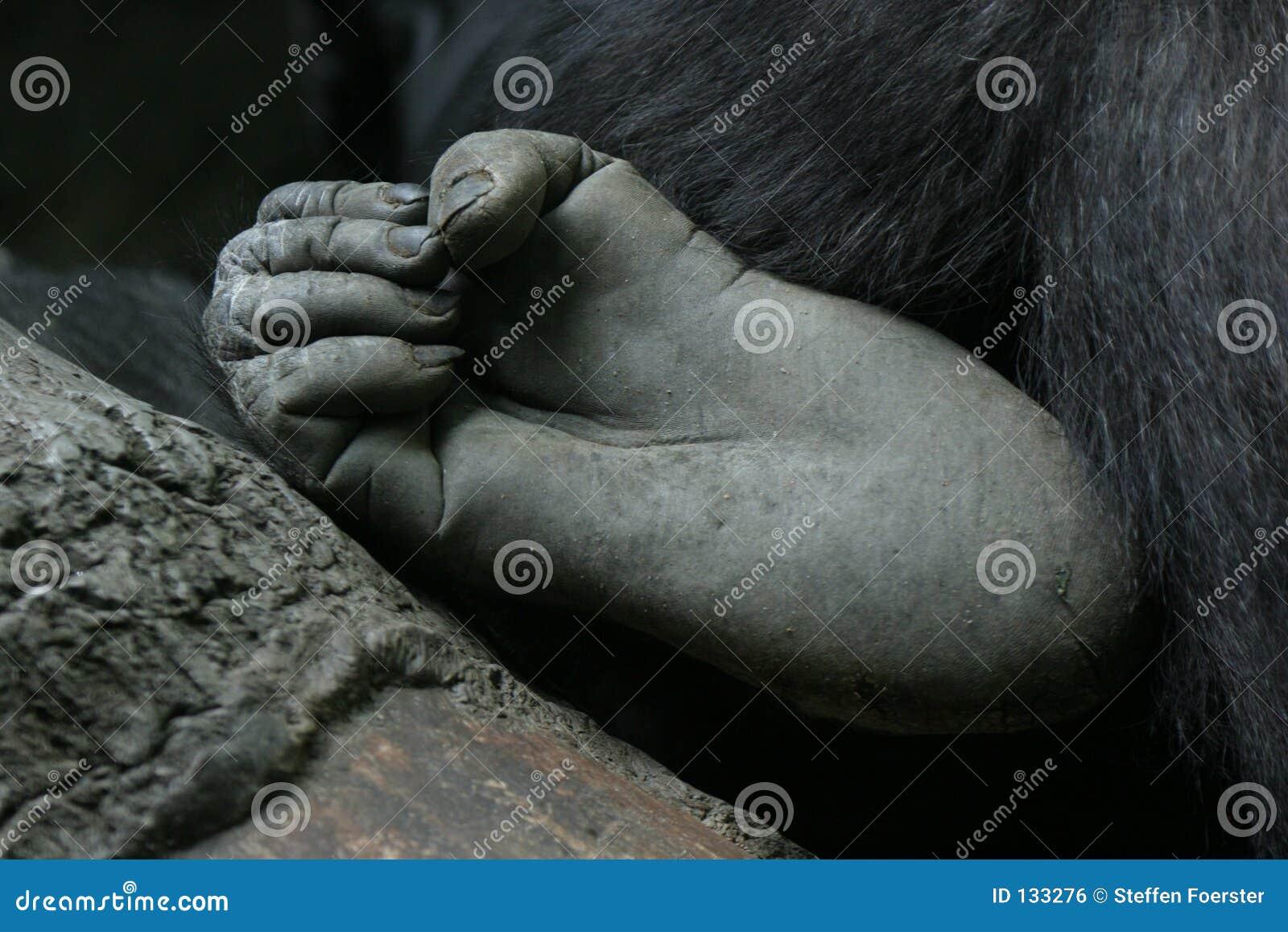 Pie del gorila