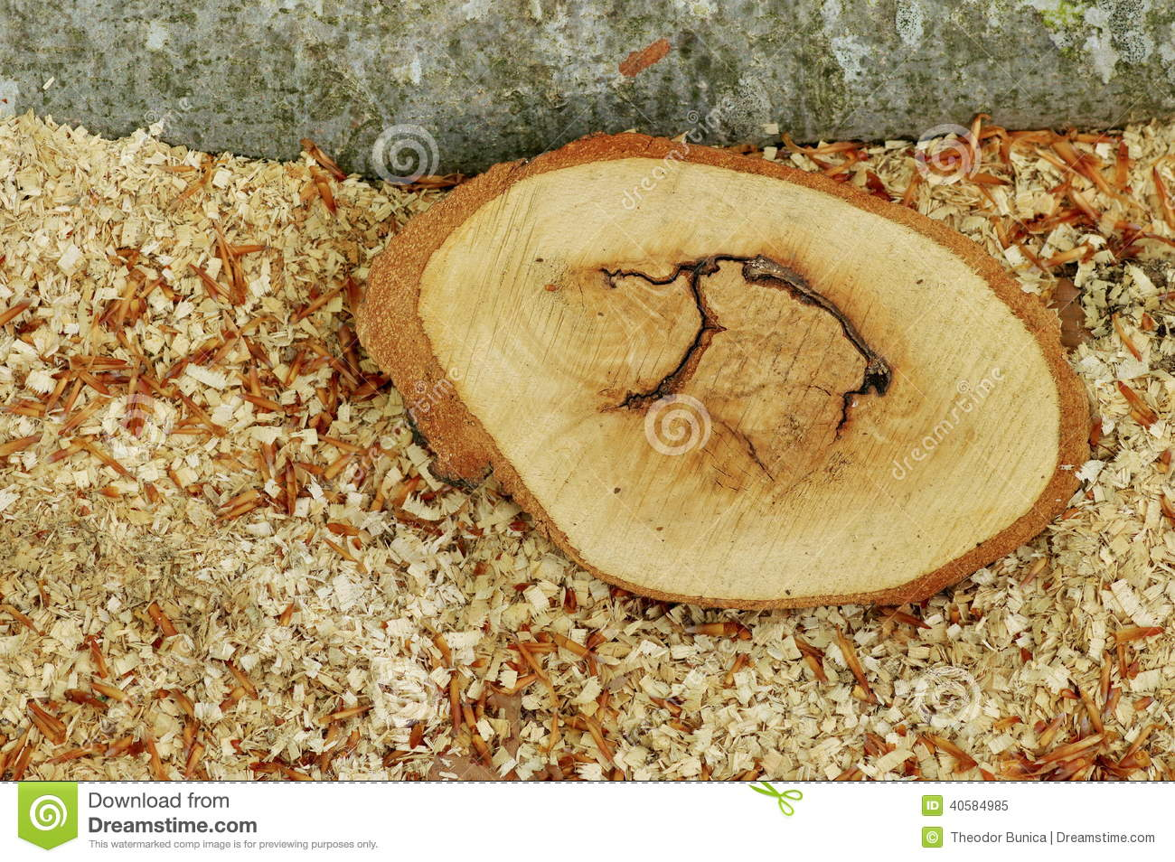 Sawdust and a piece of beech. Wood chips background