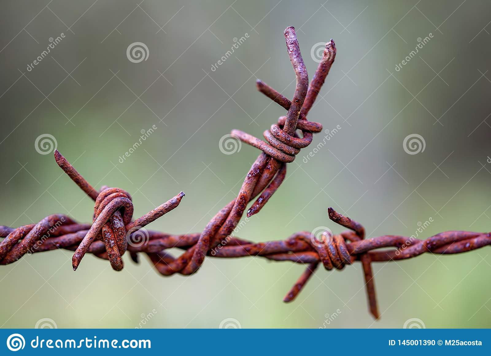 Piece of rusted barbed wire