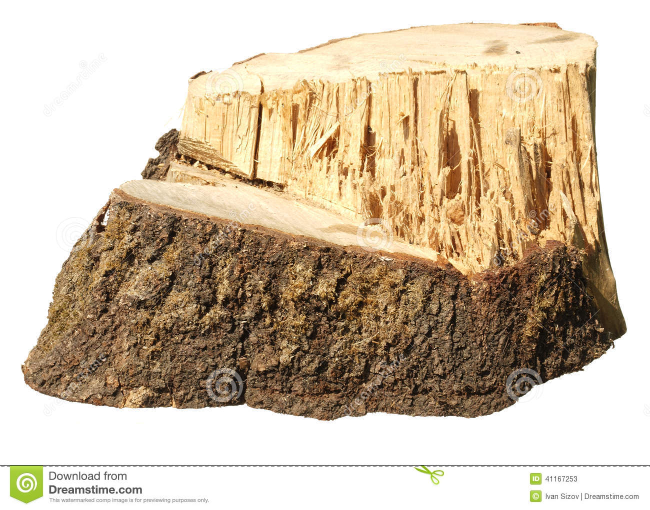 piece of tree trunk stock image image of trunk piece
