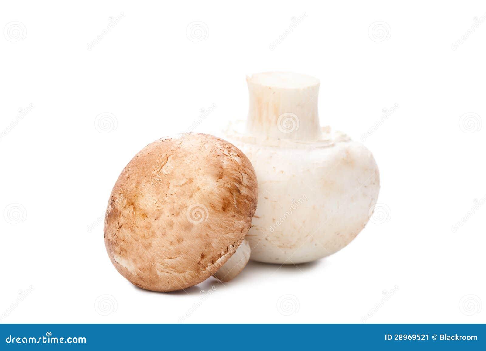Pieczarka na bielu