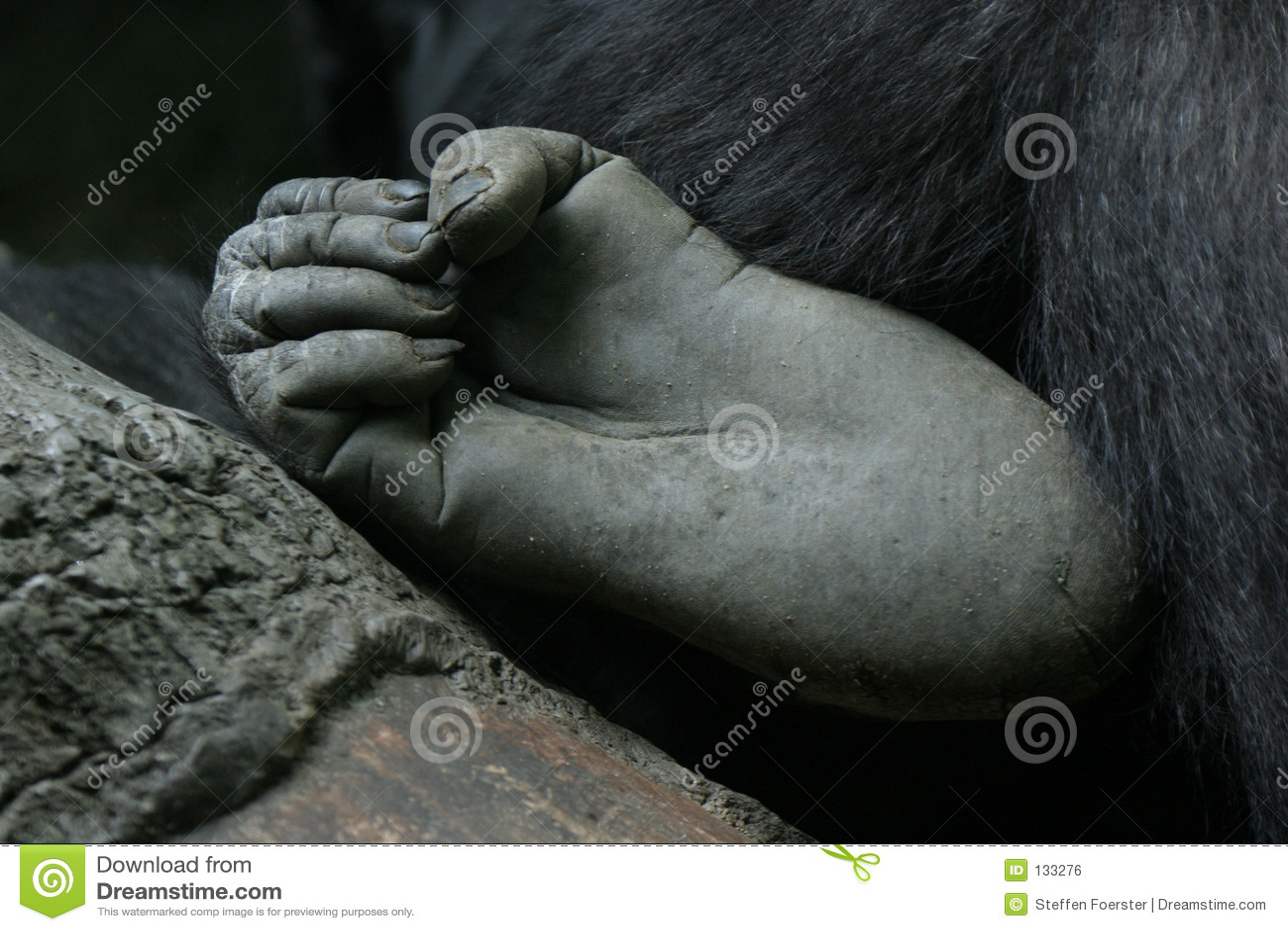 Pied de gorille