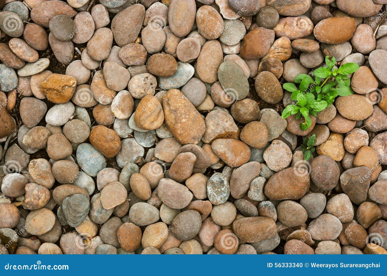piedras de la mala hierba y del ro para la decoracin del jardn foto de archivo