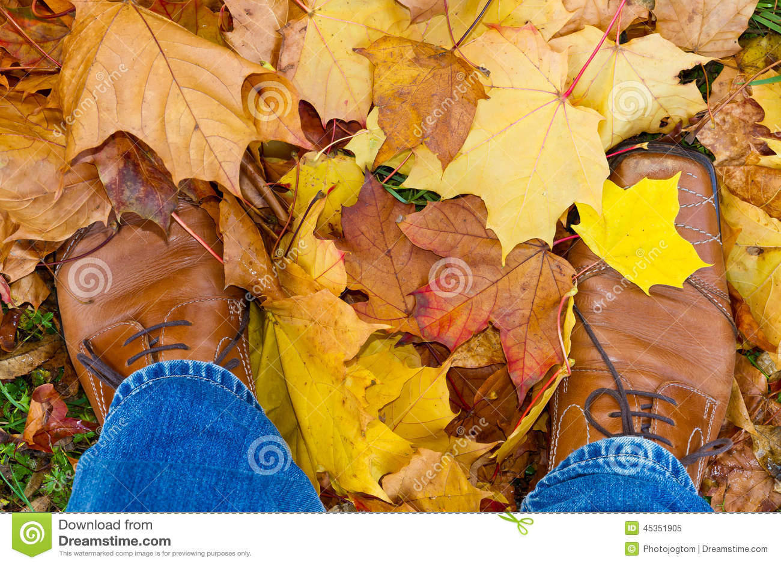 Pieds d Institut central des statistiques de feuilles d automne