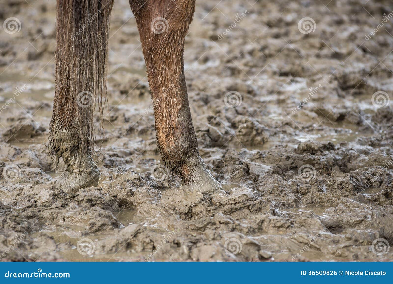 Pieds de cheval dans la boue