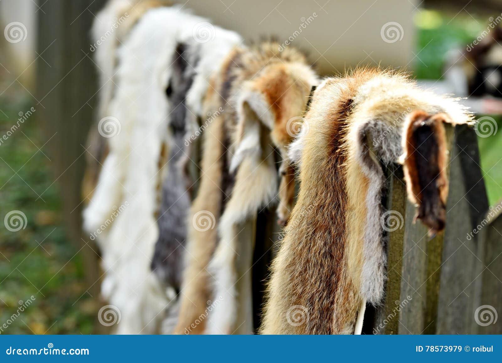 Piel de los animales para la ropa en una cerca de madera