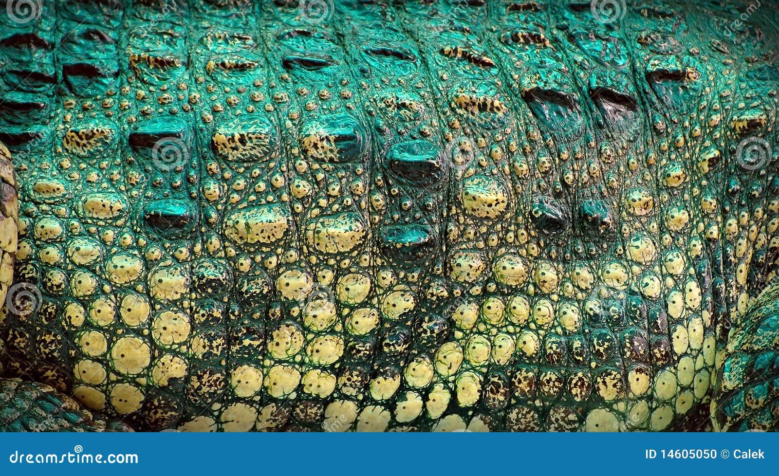 Piel del cocodrilo