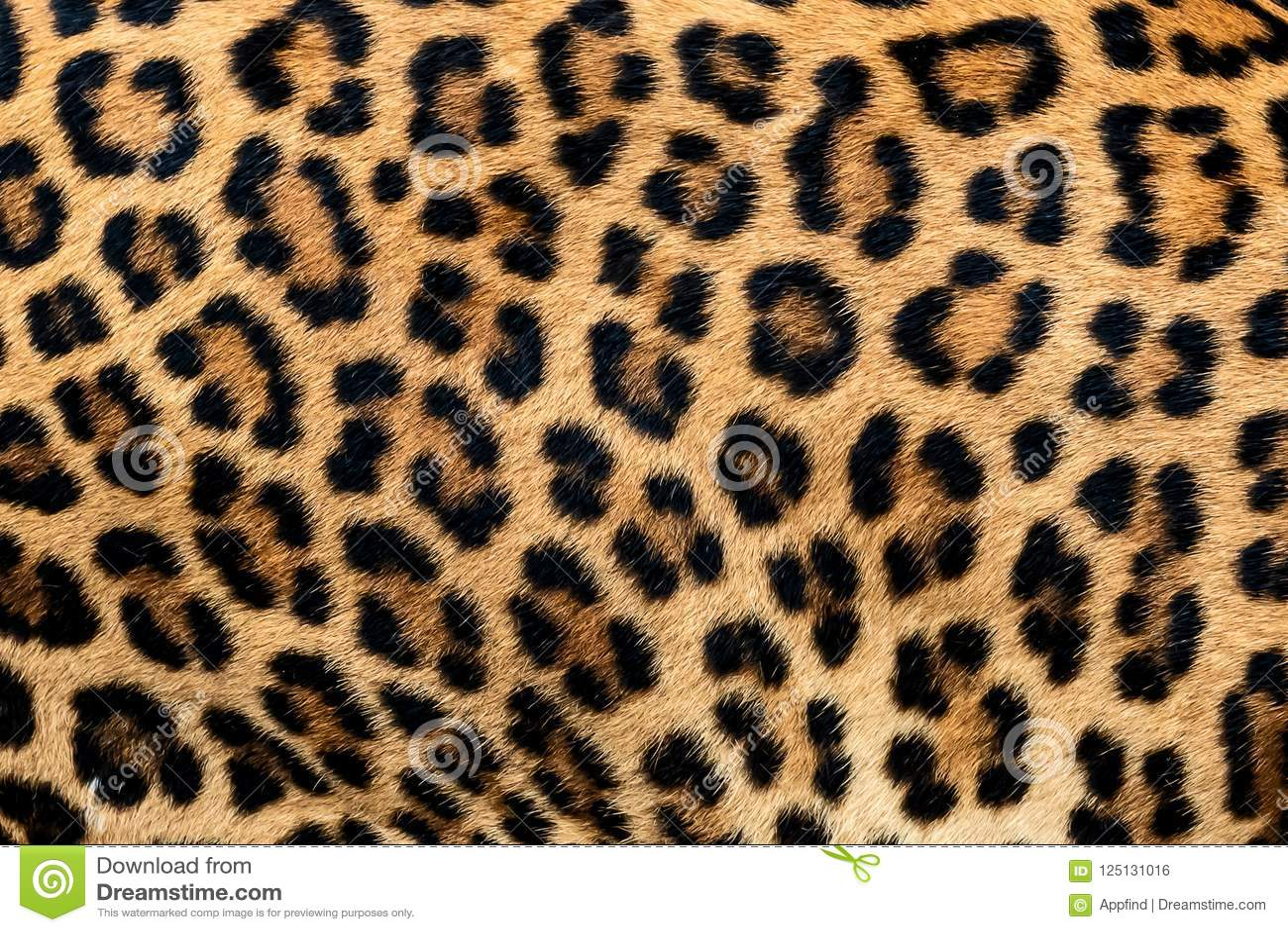 Piel del detalle del leopardo