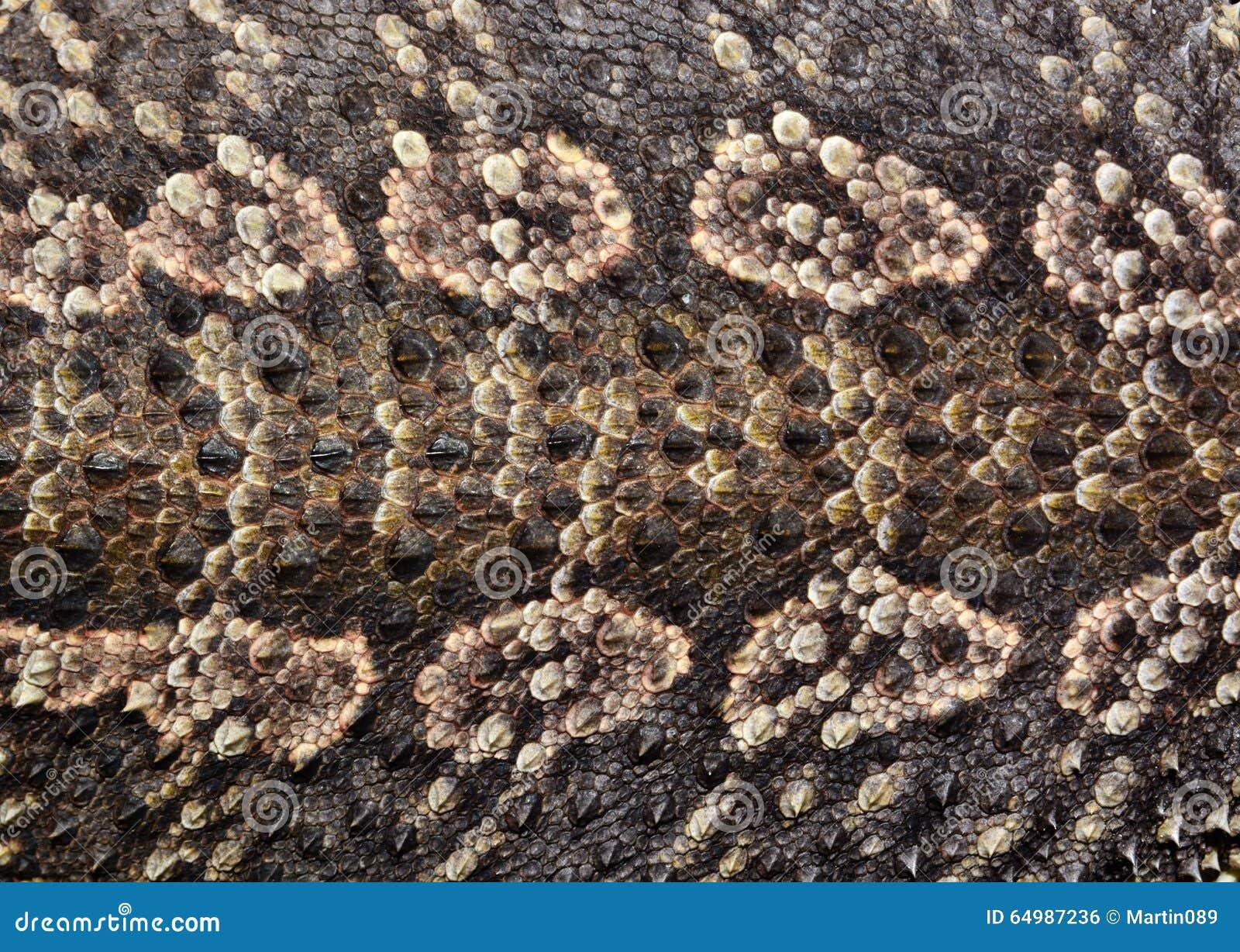 Piel del reptil