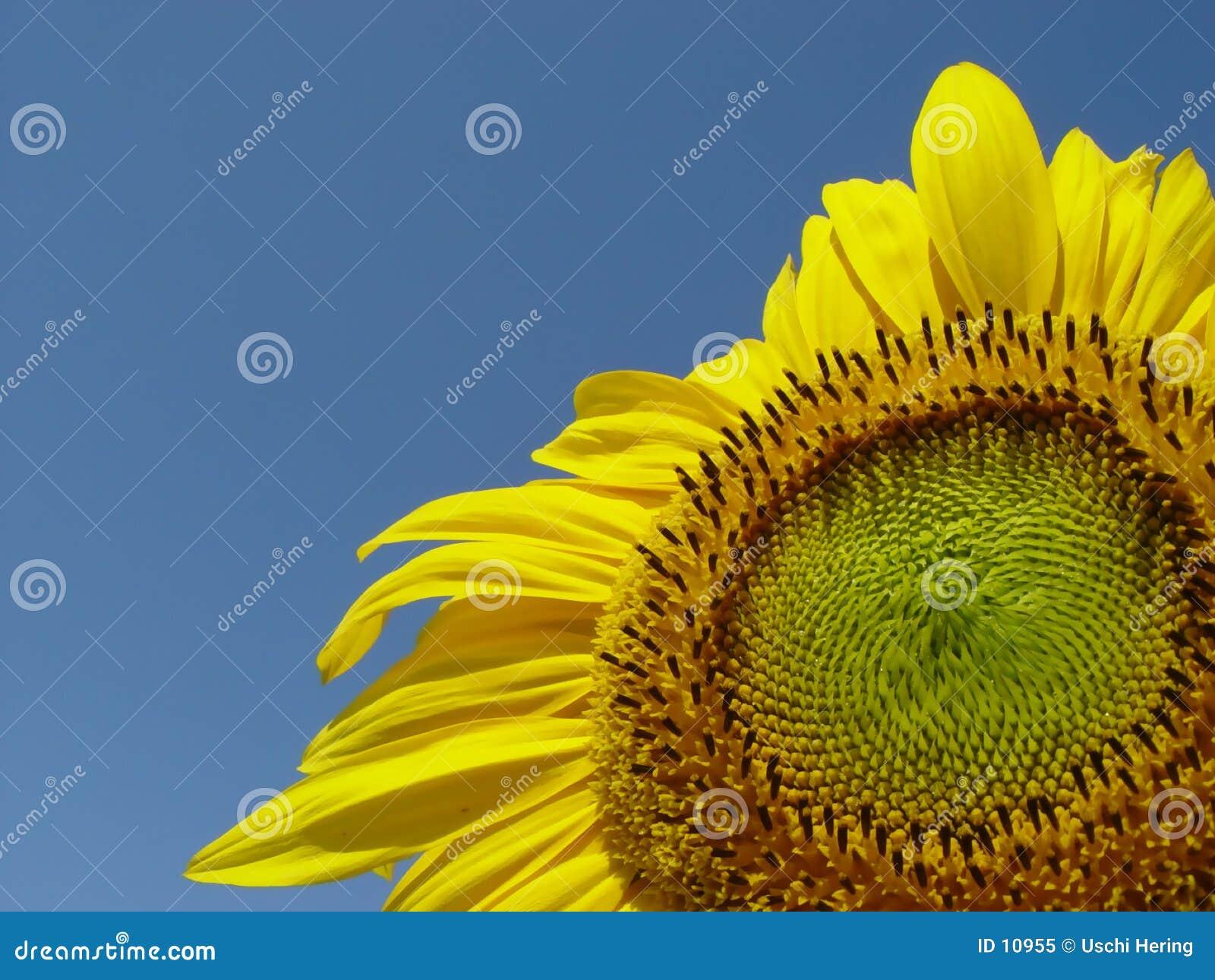 Pieno di sole