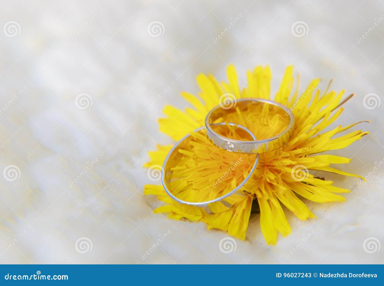 Pierścionki na dandelion kwiacie