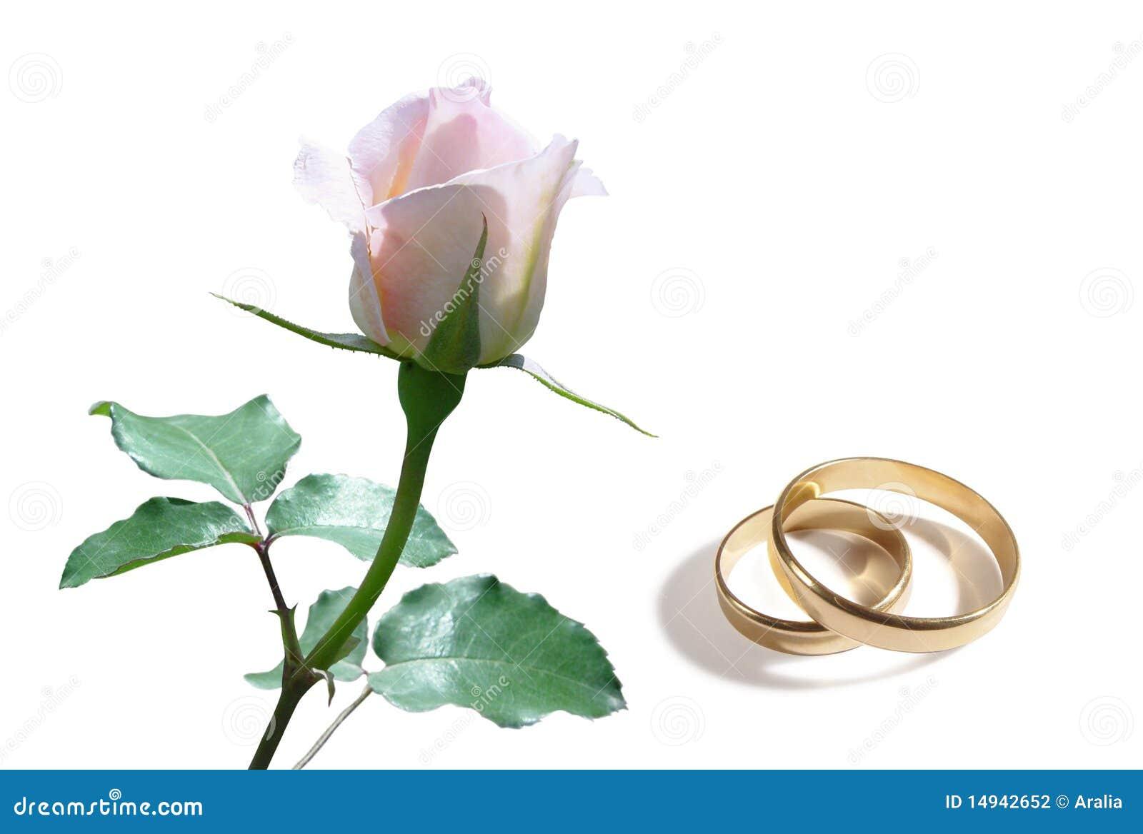 Pierścionku biel różany ślubny