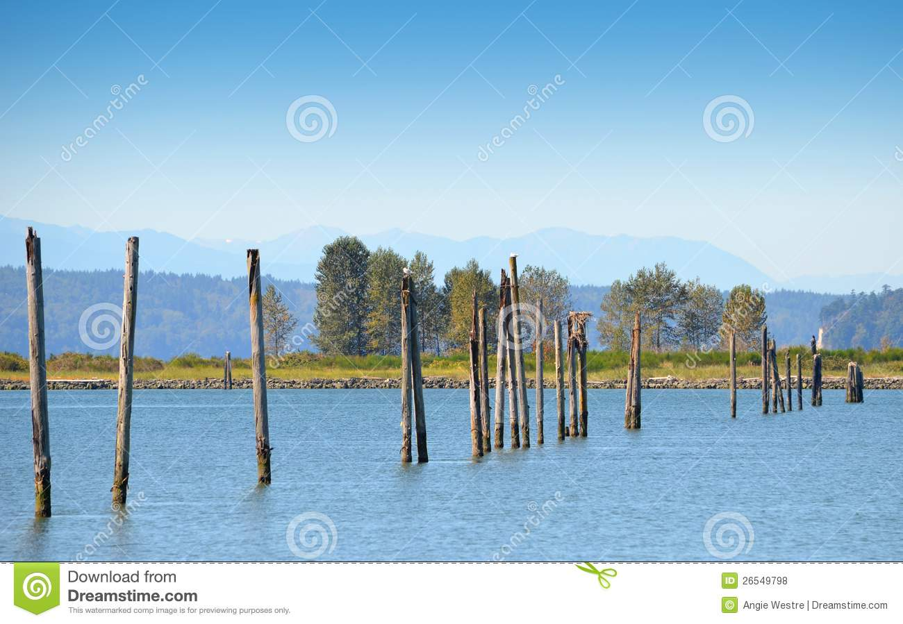 Pier pilings royalty free stock photos image 26549798 for Dock pilings cost