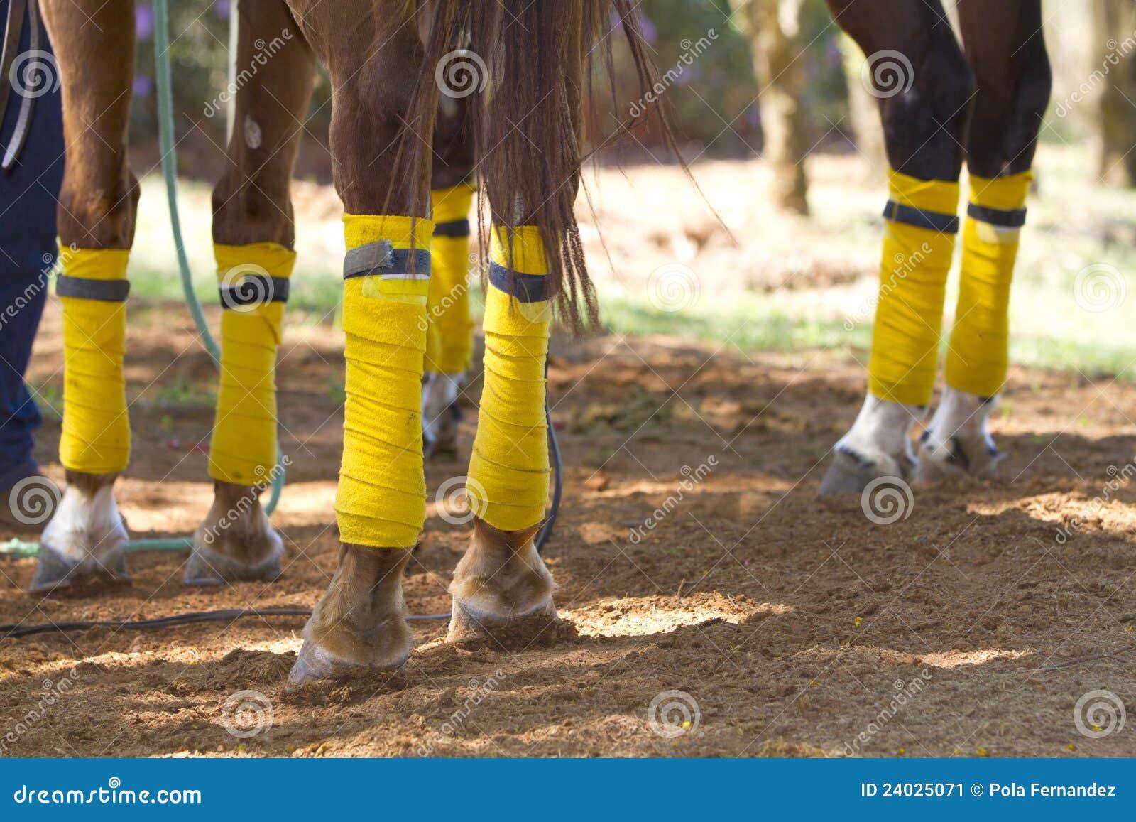 Piernas del caballo