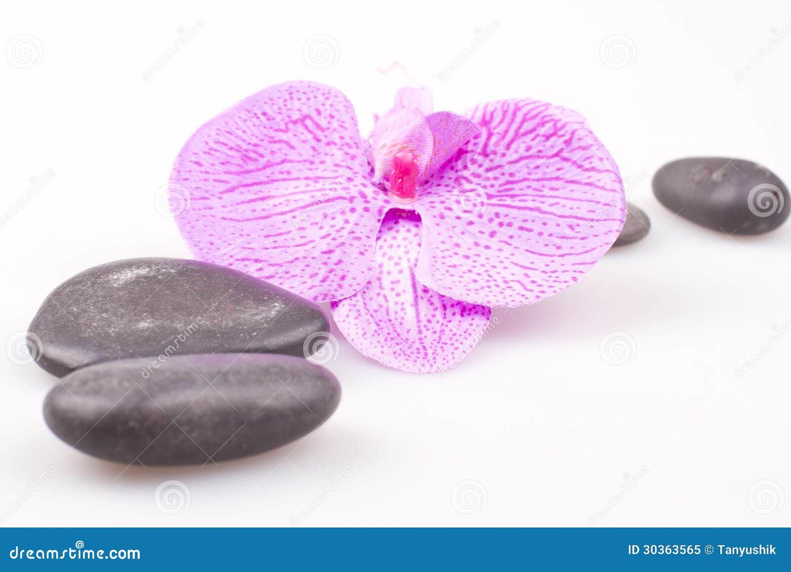 Pierre de massage avec l 39 orchid e photo libre de droits - Symbole de l orchidee ...