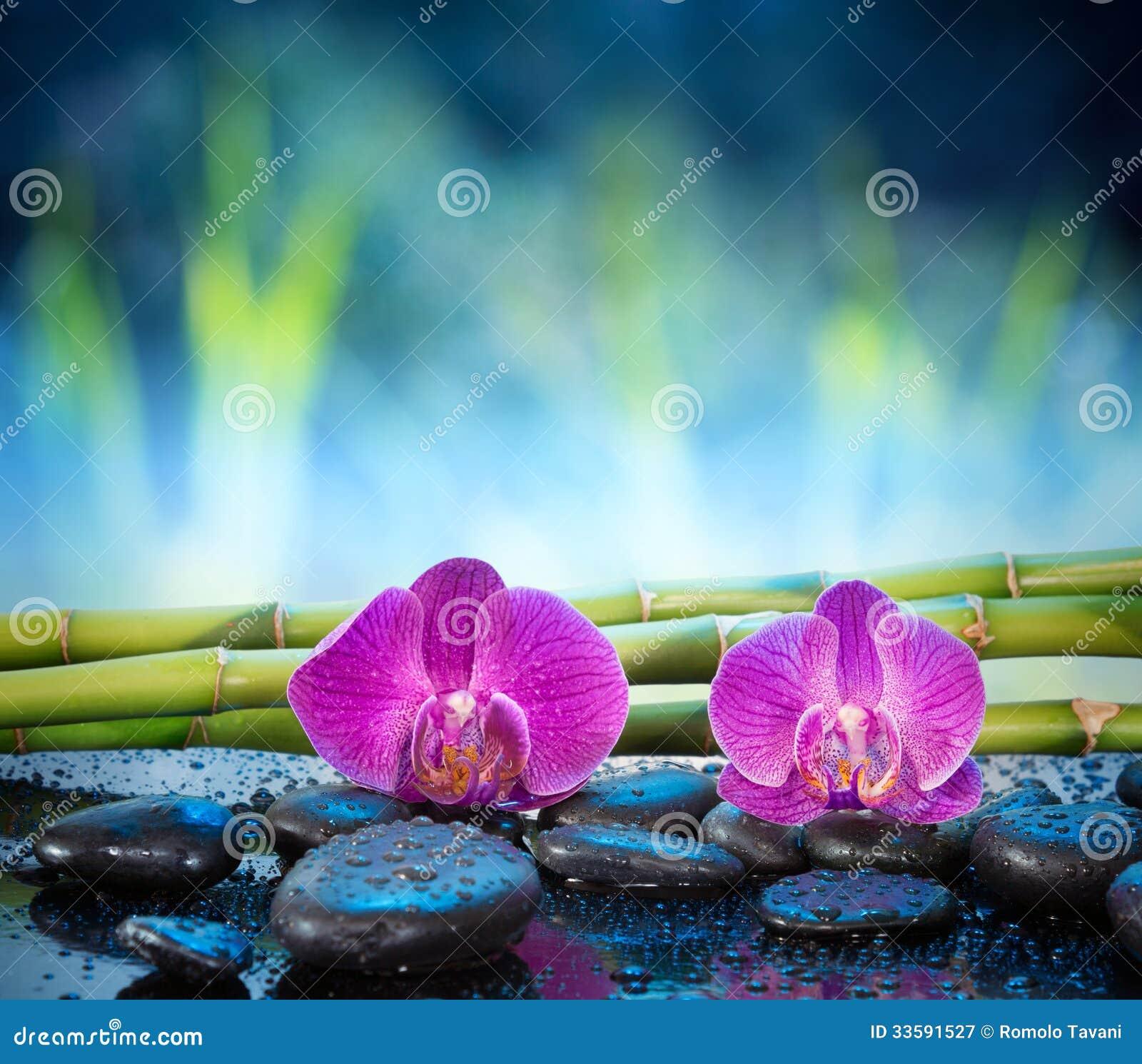 Pierre et bambou d 39 orchid es de fond dans le jardin for Bambou dans le jardin