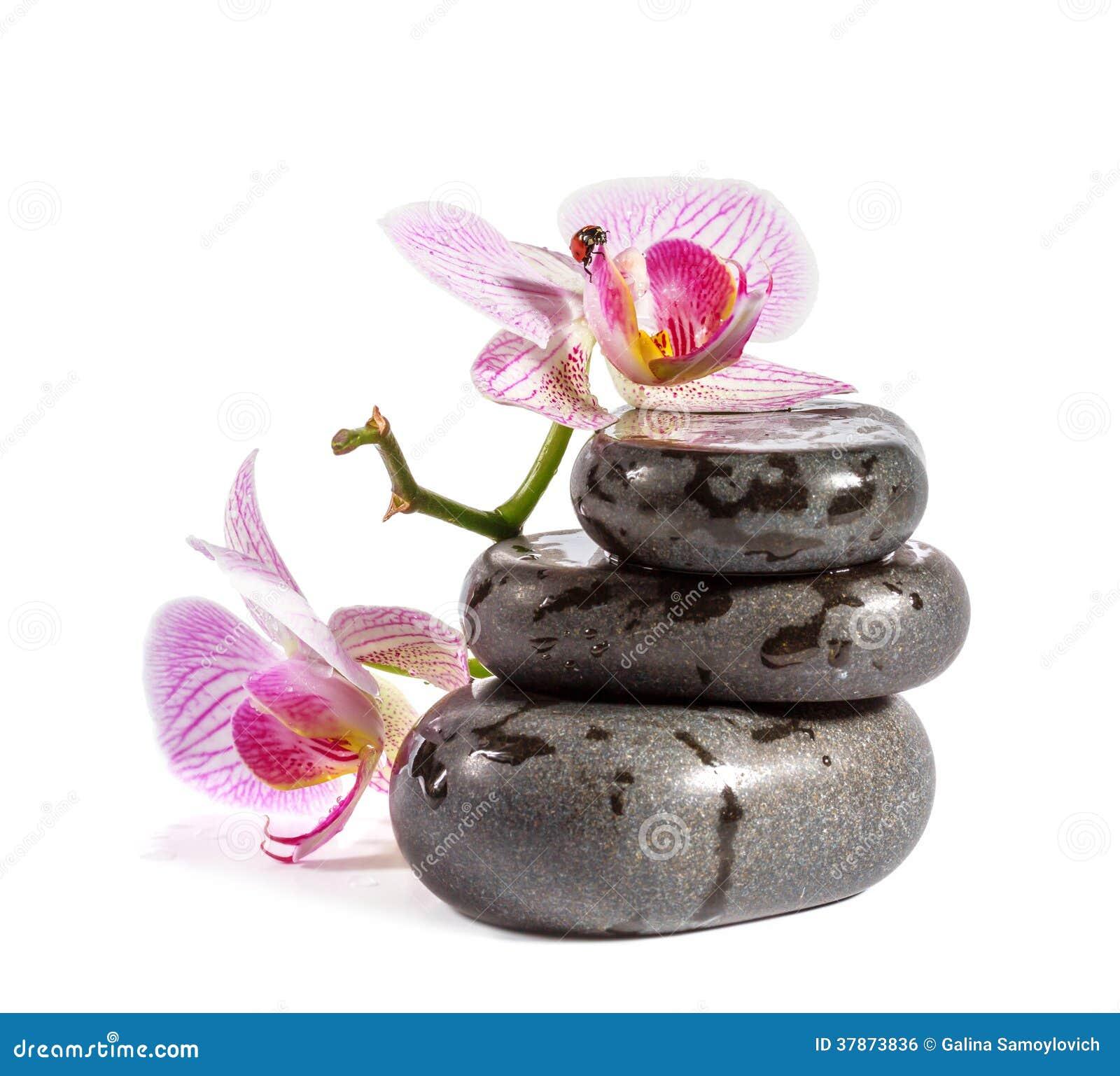 Pierres de zen avec l 39 orchid e et la coccinelle image - Entretien de l orchidee ...