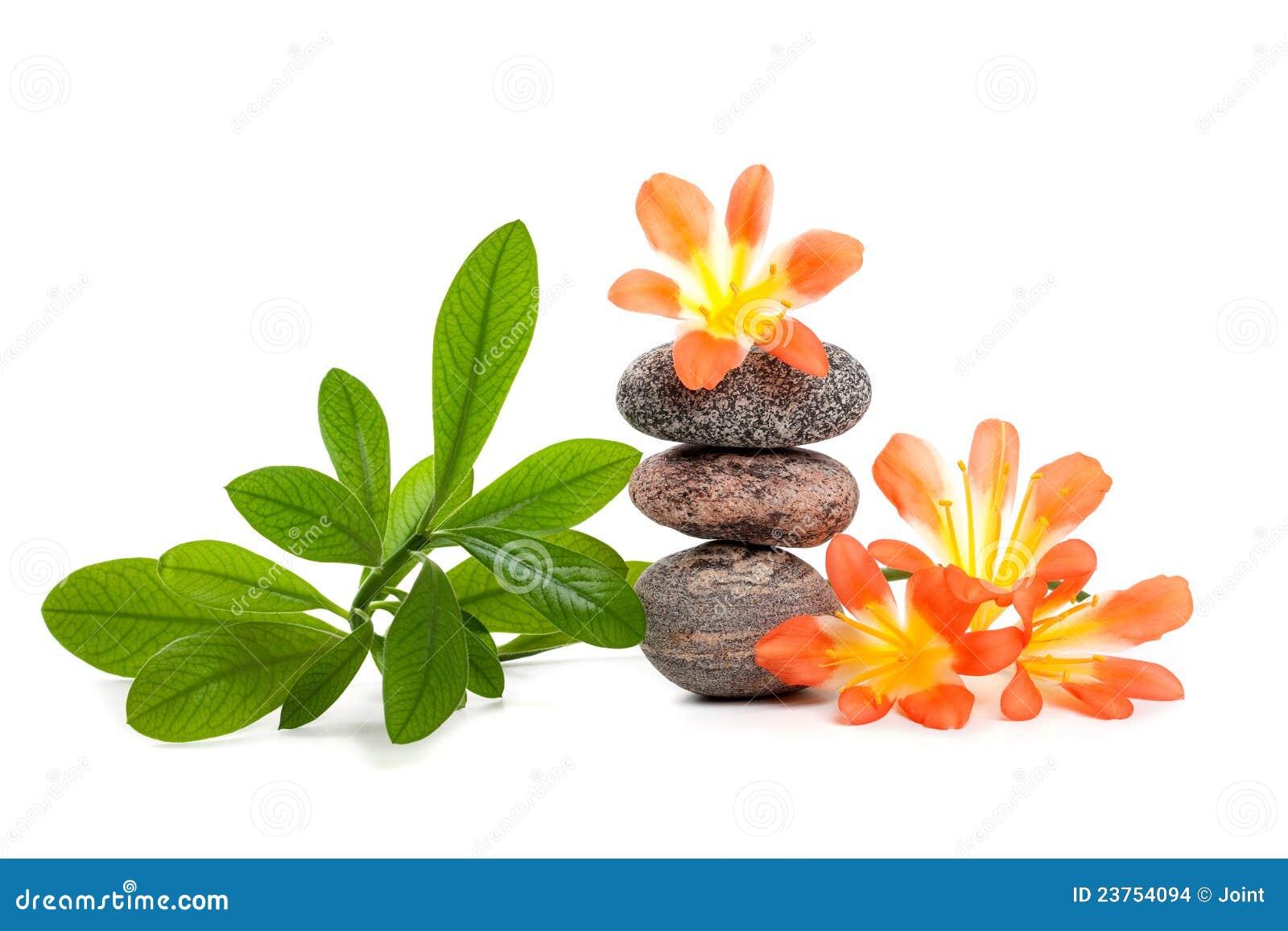 Pierres de zen avec les fleurs et la plante verte Images stock