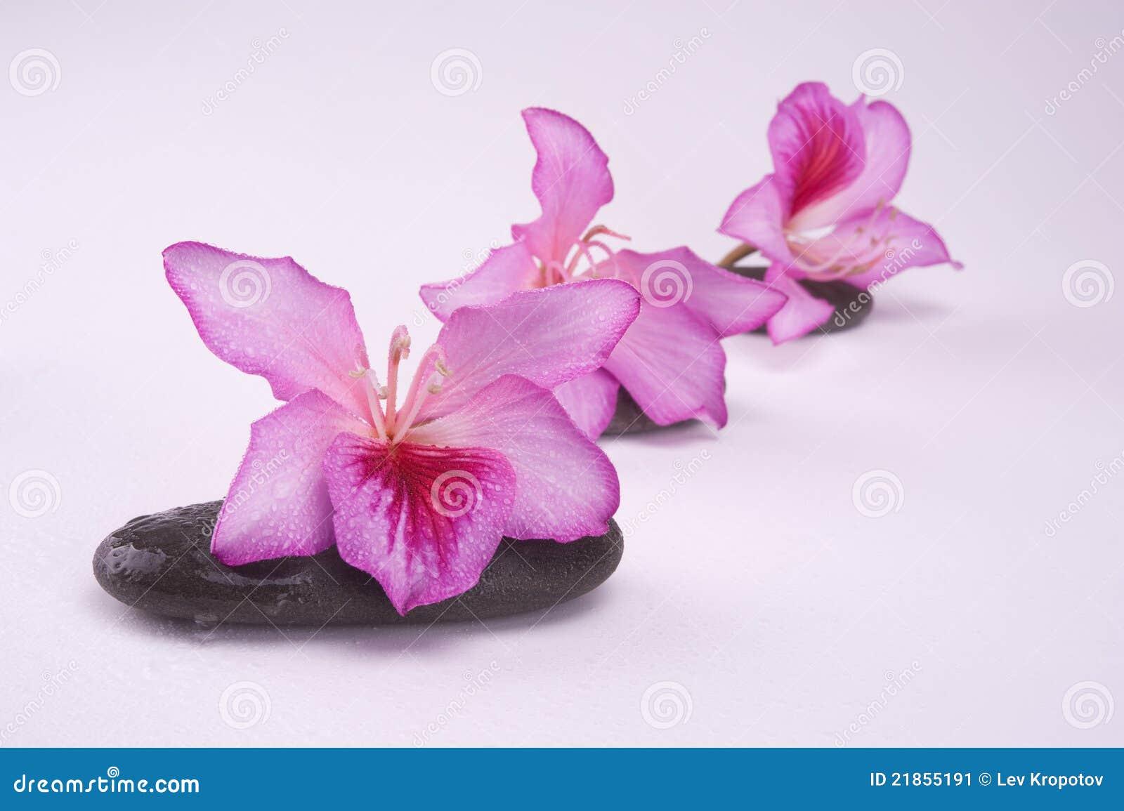 Pierres de zen avec les fleurs roses image stock image for Bouquet de fleurs zen