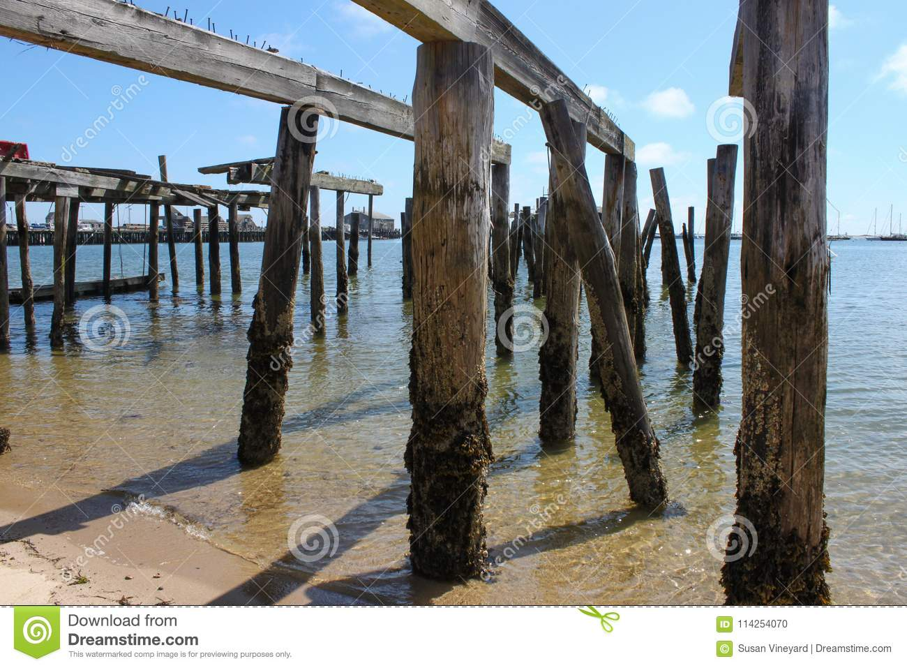 Piers from destroyed dock standing crooked out in the ocean with moss and barnacles around bottoms and a marina and sailboats in t