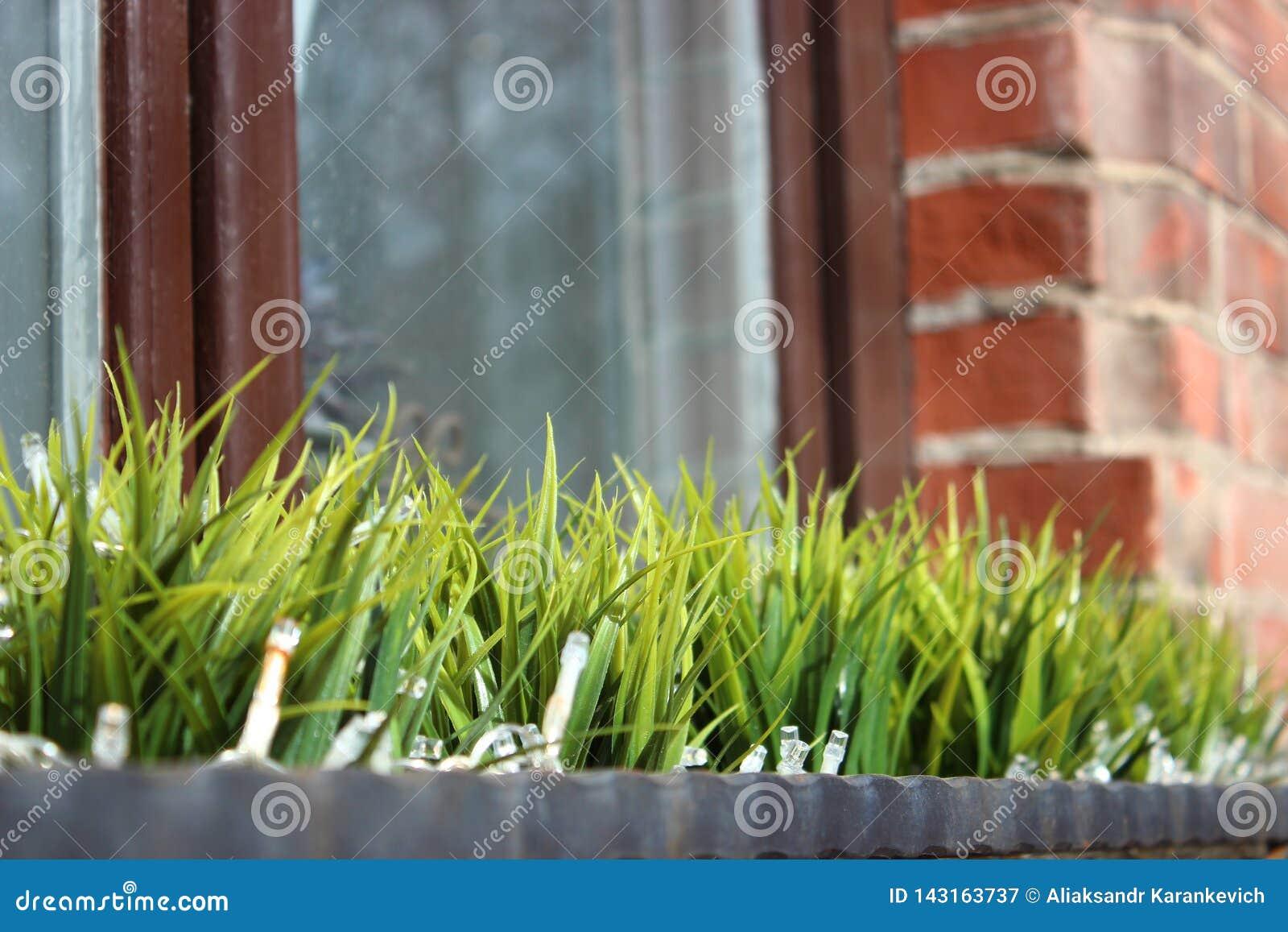 Pierwszy roślinność po zimy, nadokienna dekoracja trawa w wazie przeciw okno i ścianie z cegieł Częściowa ostrość
