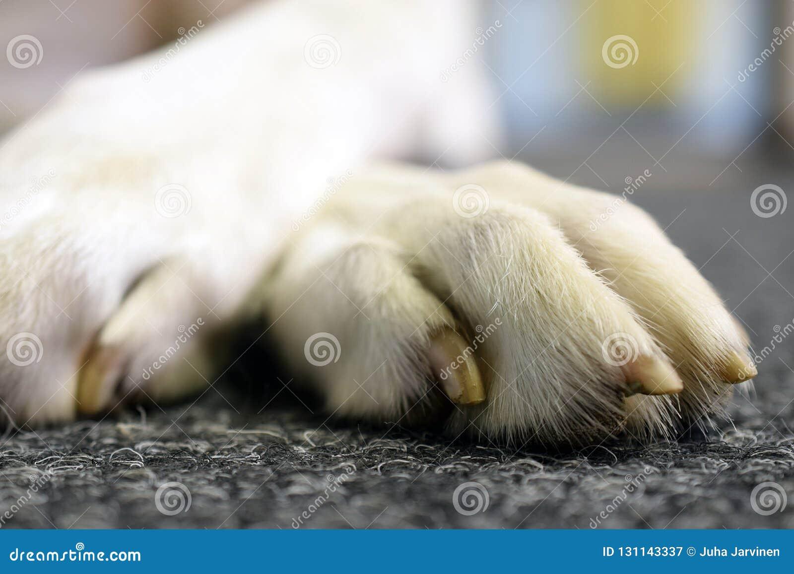 Pies łapa zamknięta w górę
